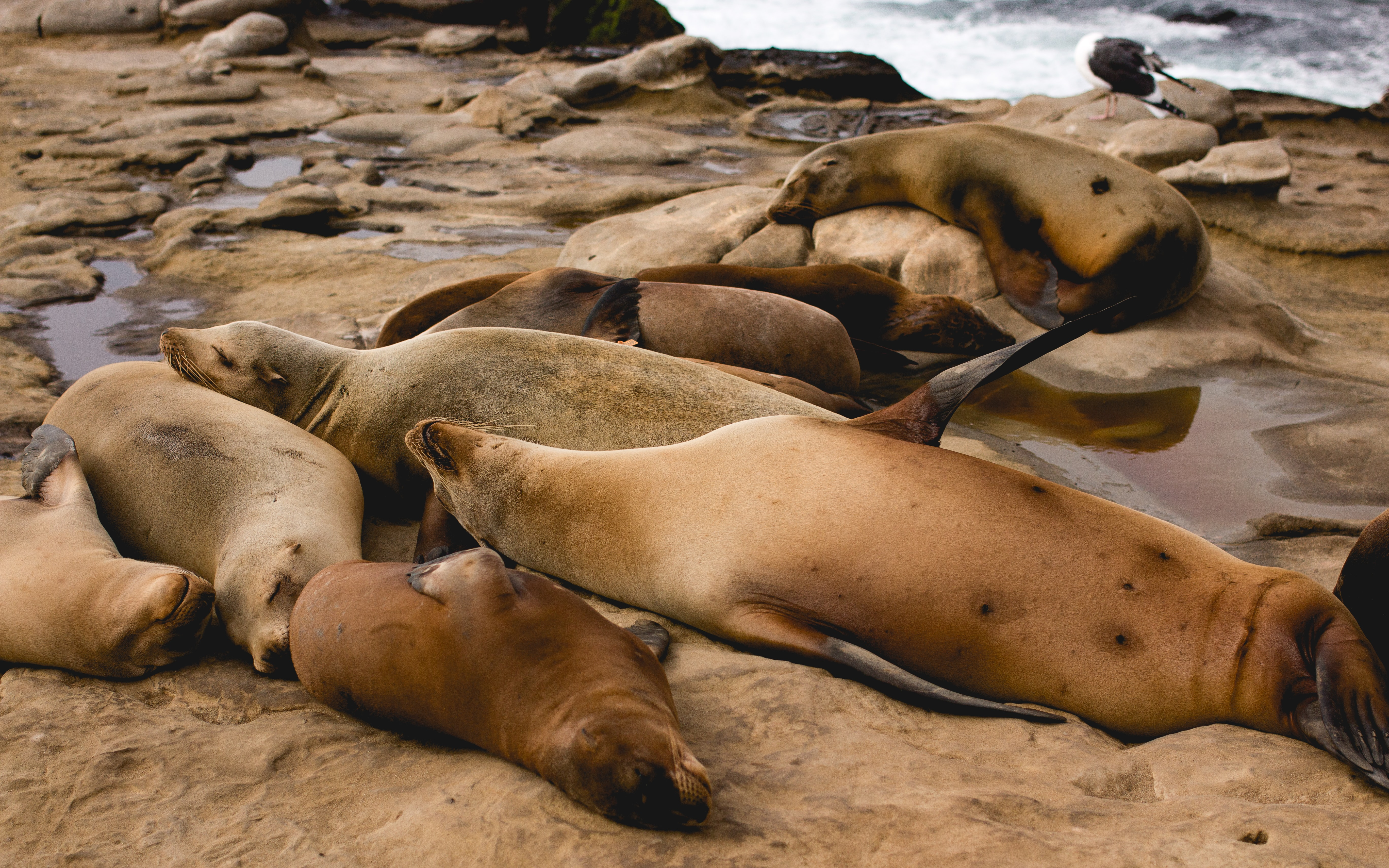 group of seal in shore
