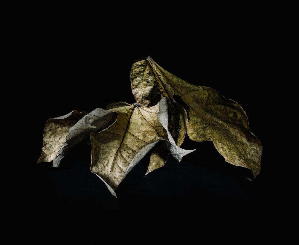 macro shot of dried leaves