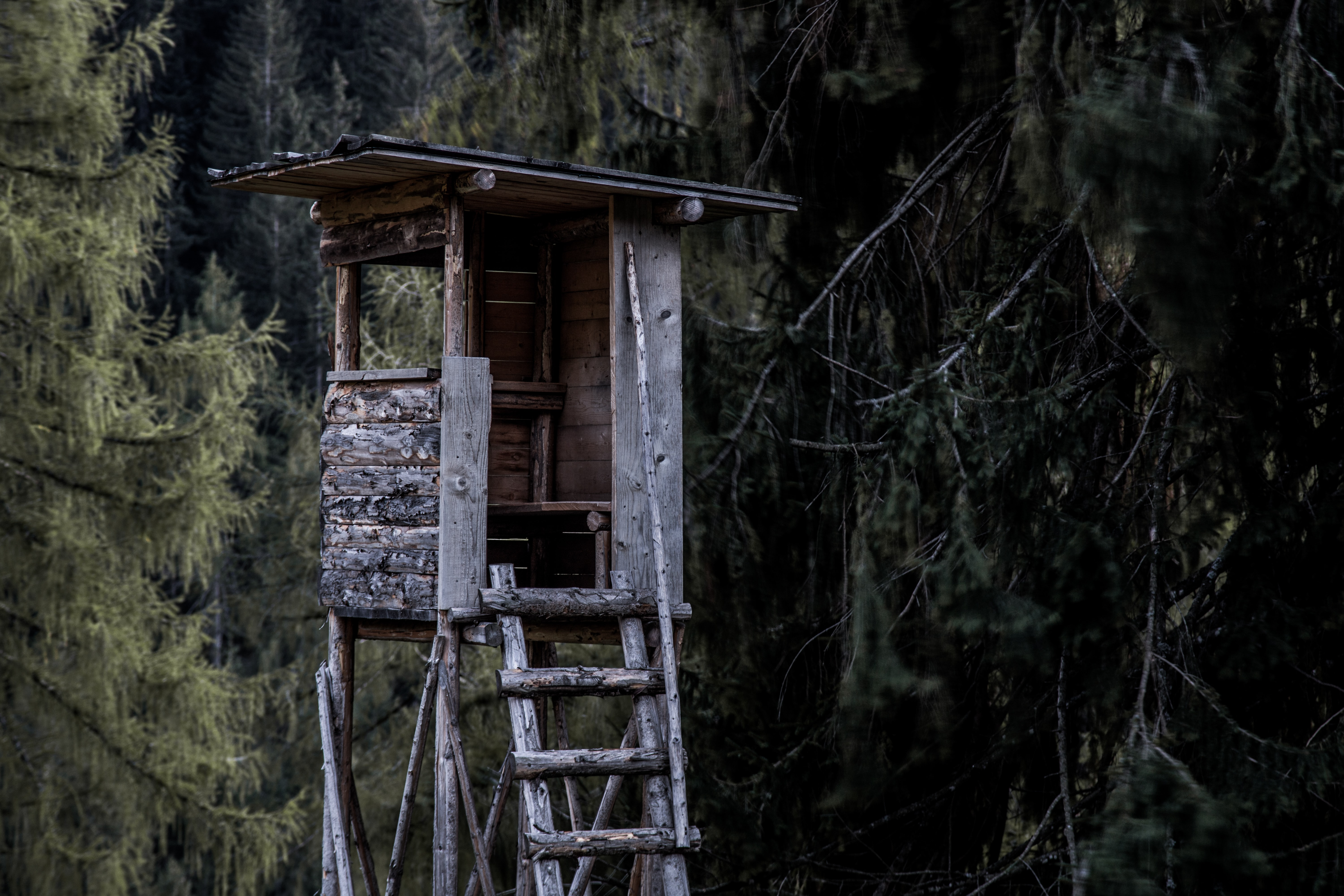 gray wooden tree house beside trees