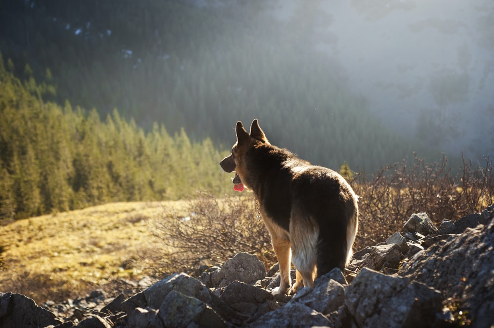 brown dog standing on gray rocks