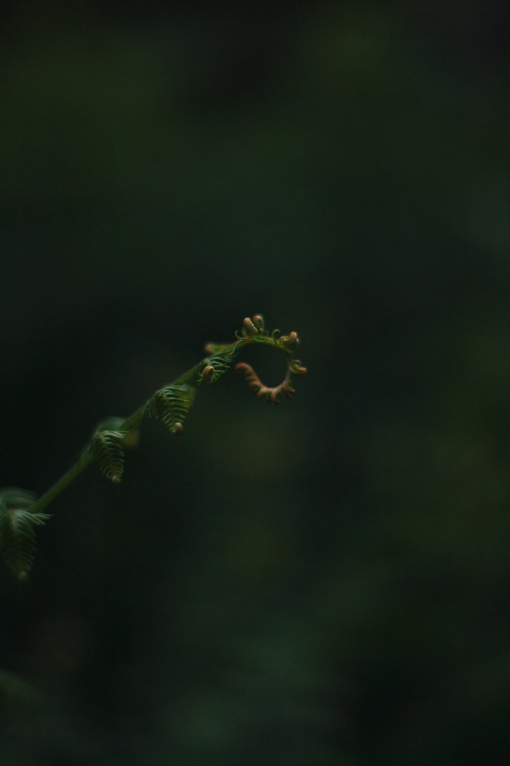 selective focus of green fern