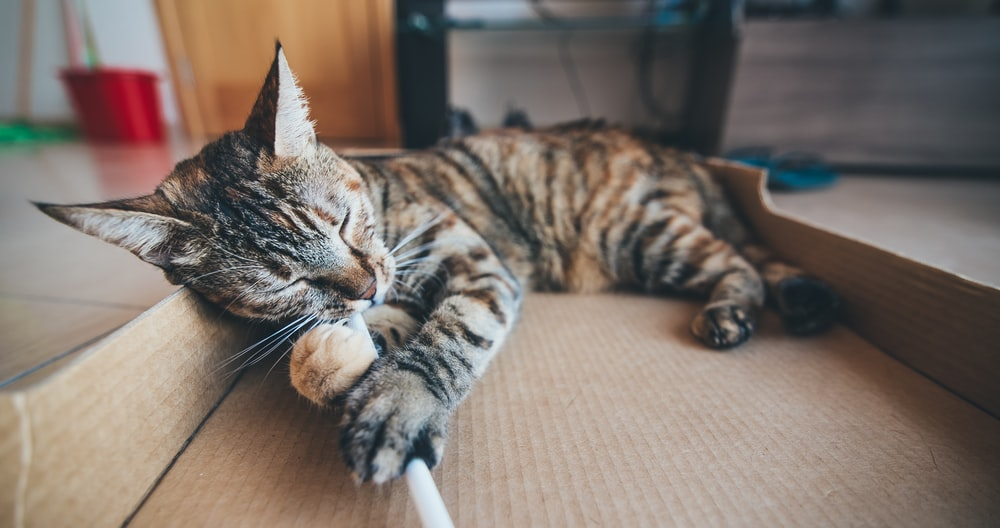 brown tabby cat lying on cardboard box