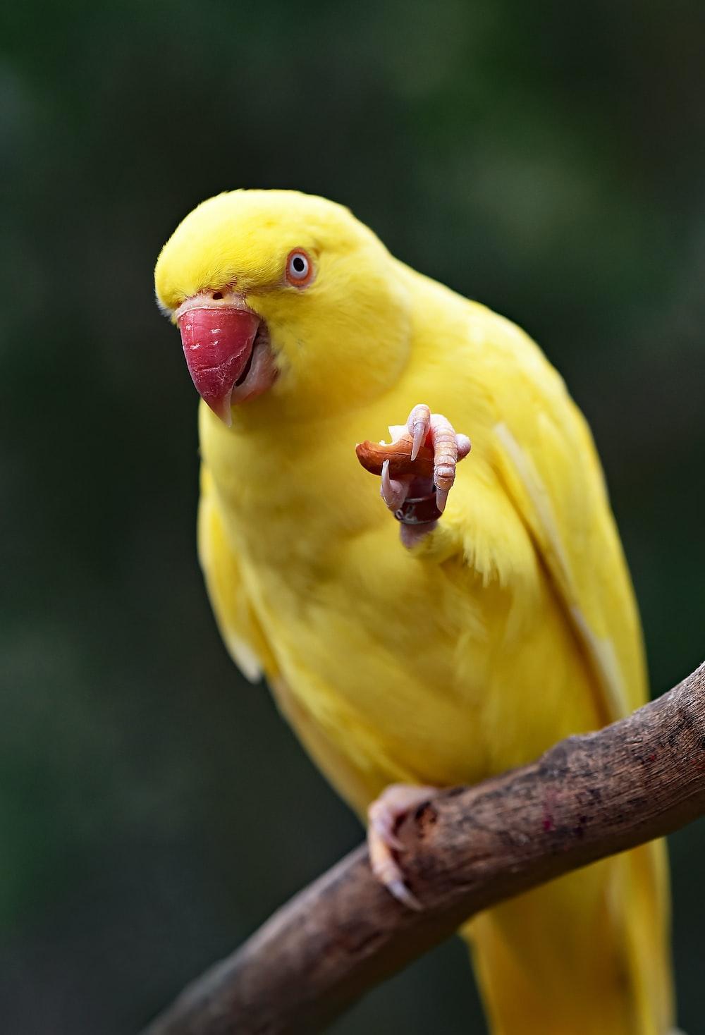 yellow parakeet on tree string