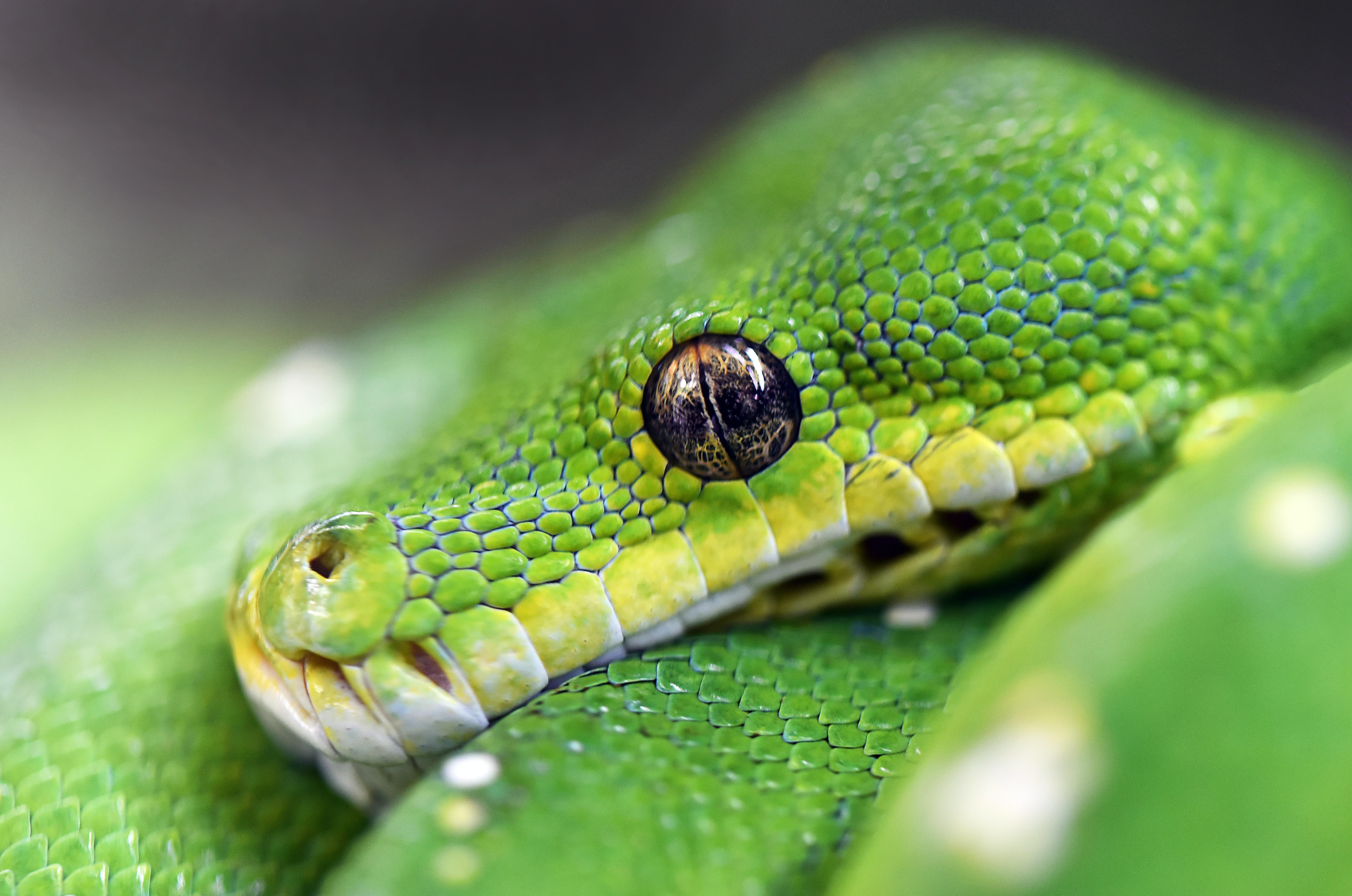 macro photography of green viper