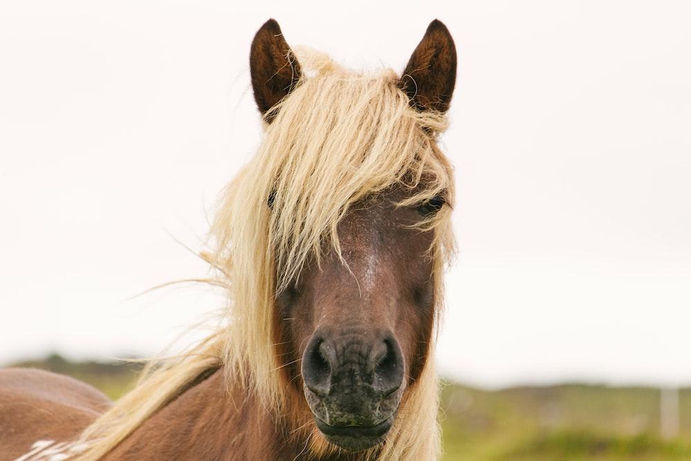 brown horse closeup photo