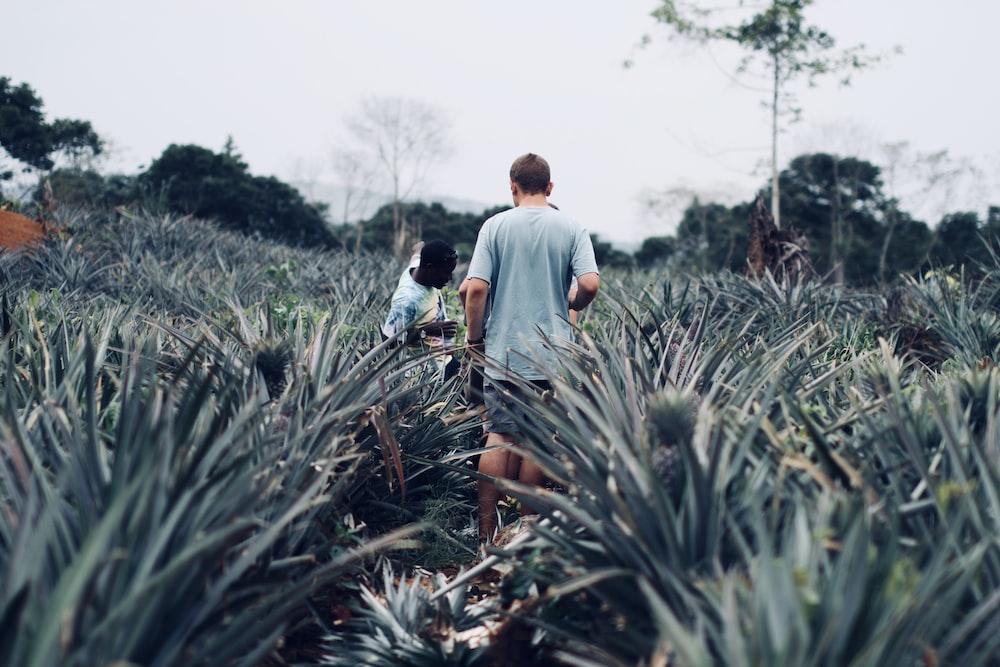 people standing on pineapple farm