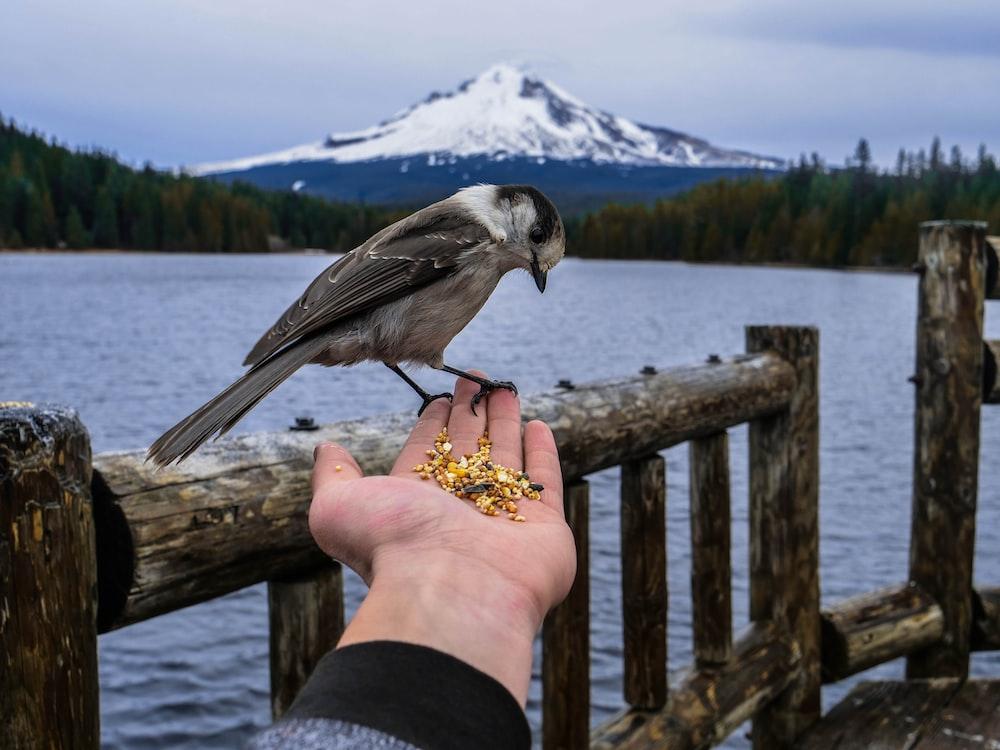 man feeding gray bird on hand