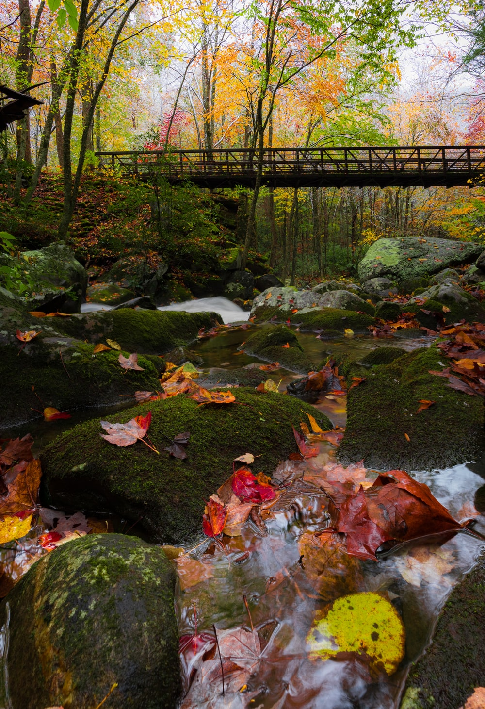 bridge beside green leaf trees