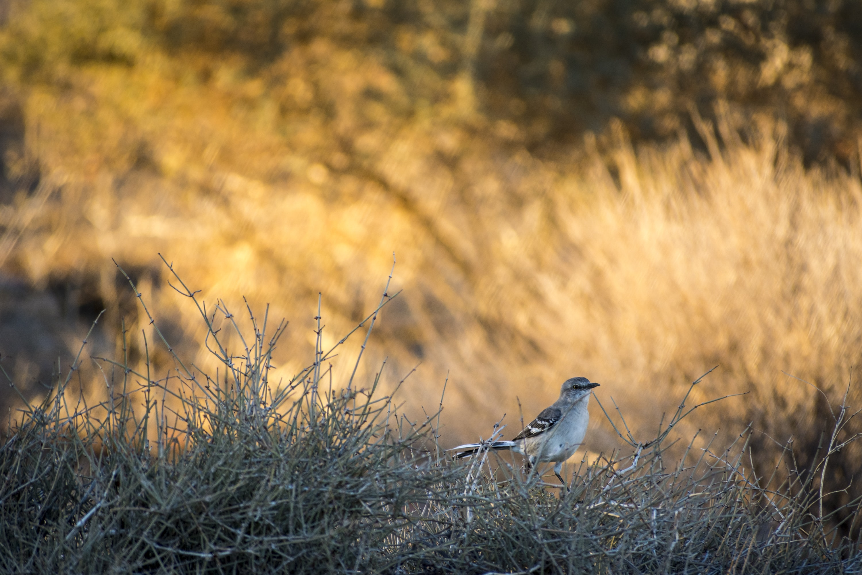 focused photo of a bird