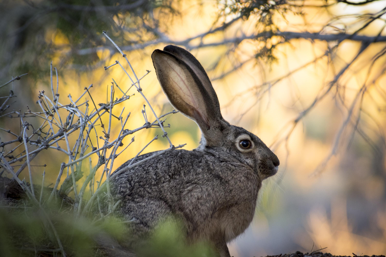brown rabbits sitting near wood twigs