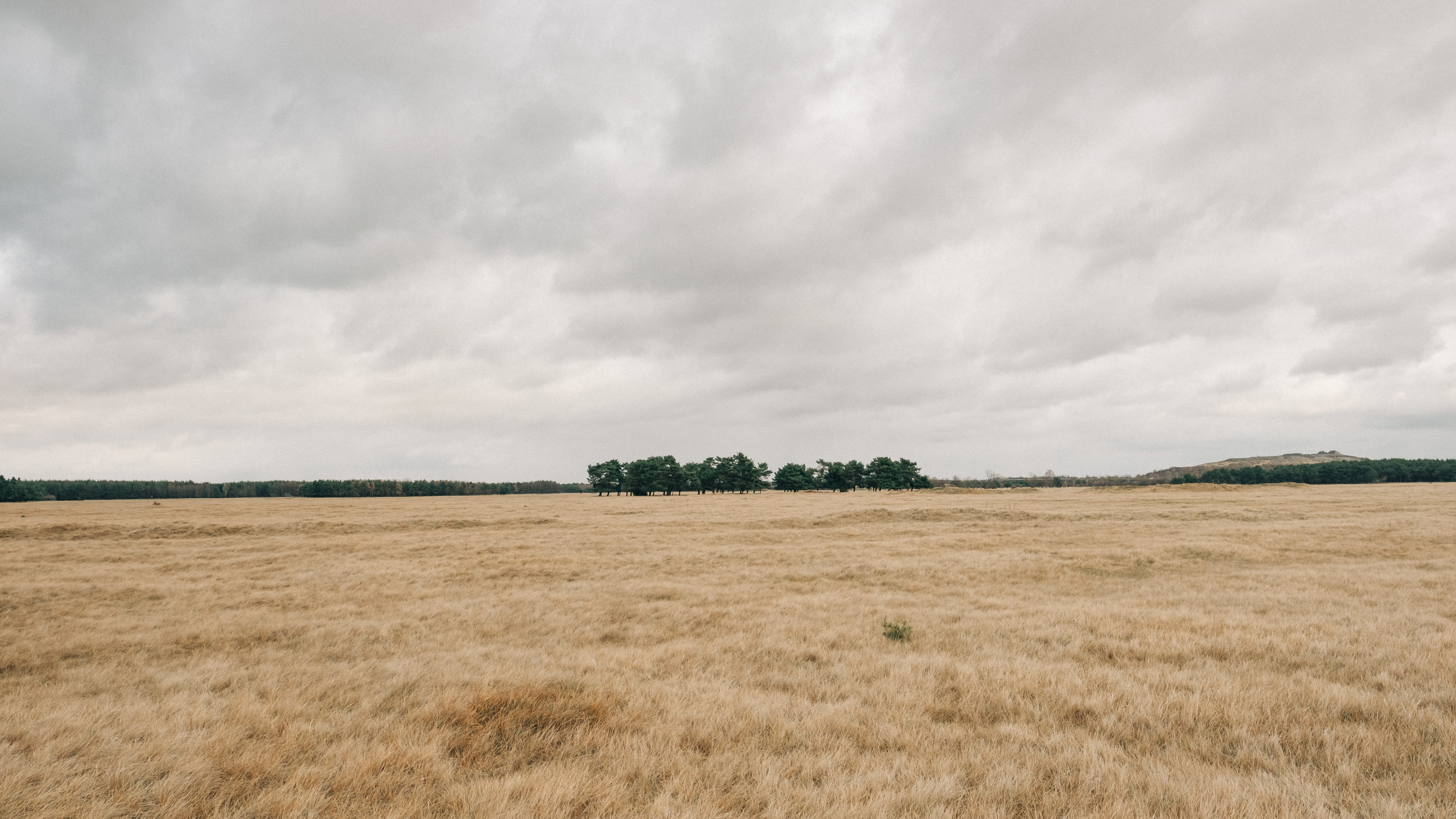 photo of dried field