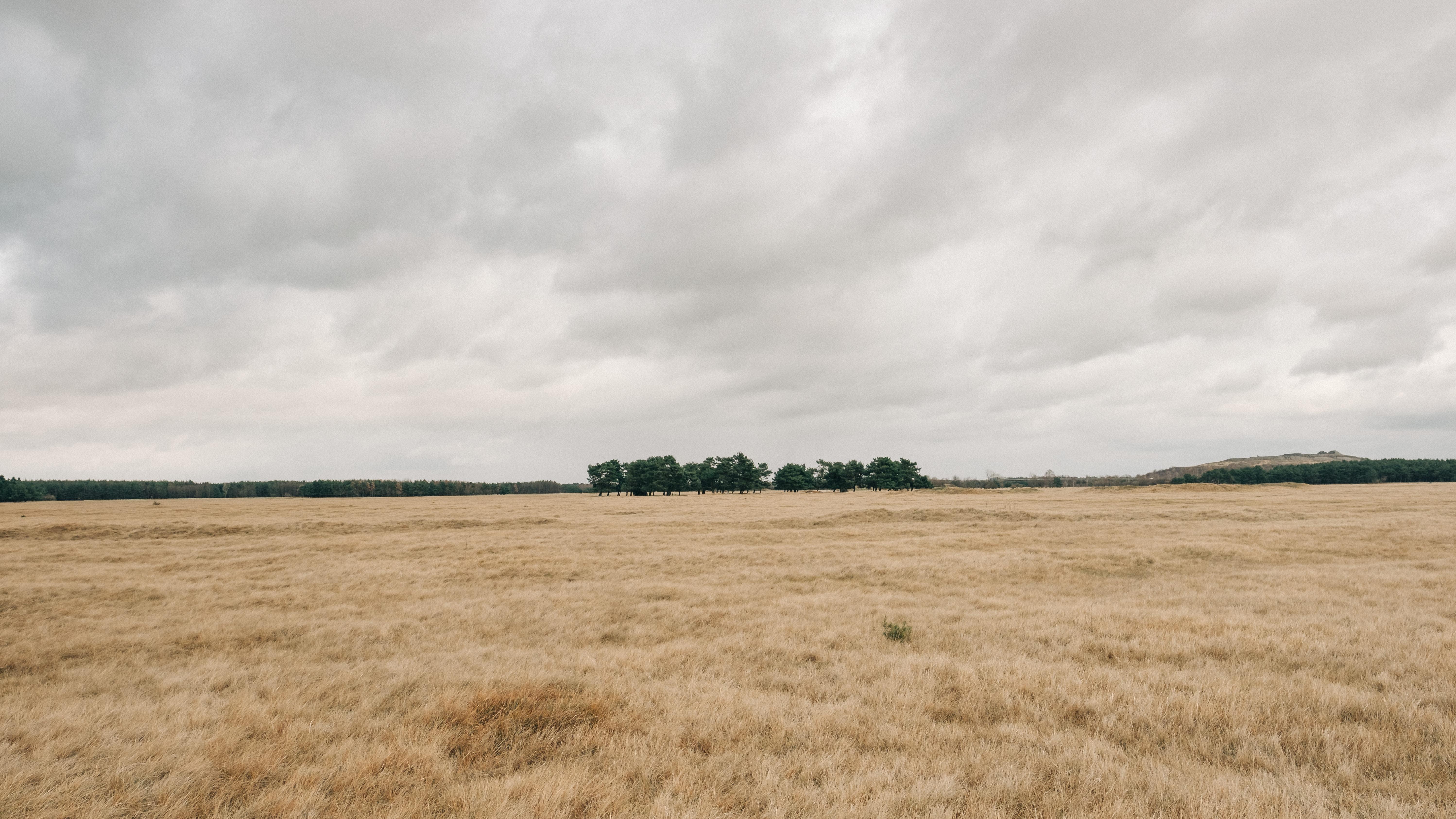 photo of dried field