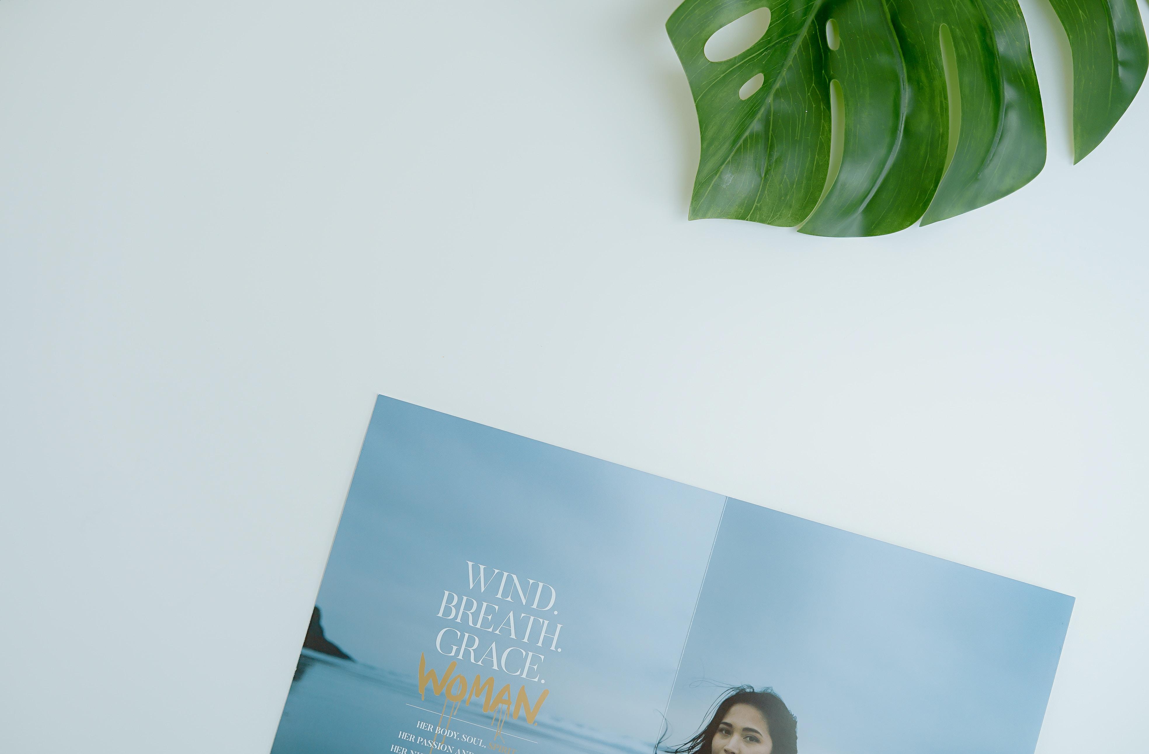 green Swiss cheese leaf beside open magazine on white platform
