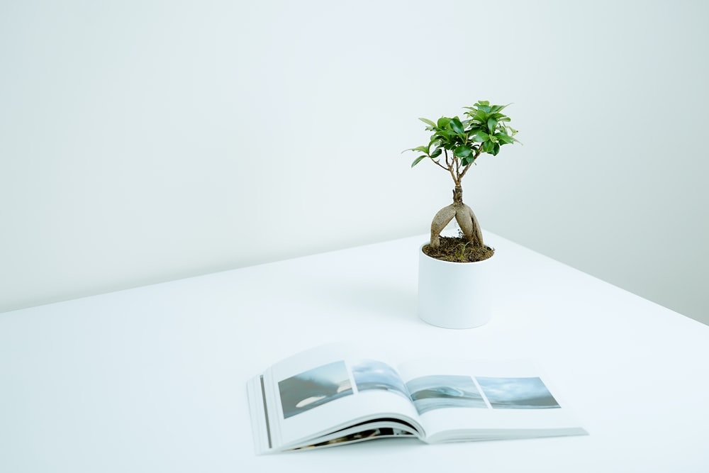 green plant in pot near book on table