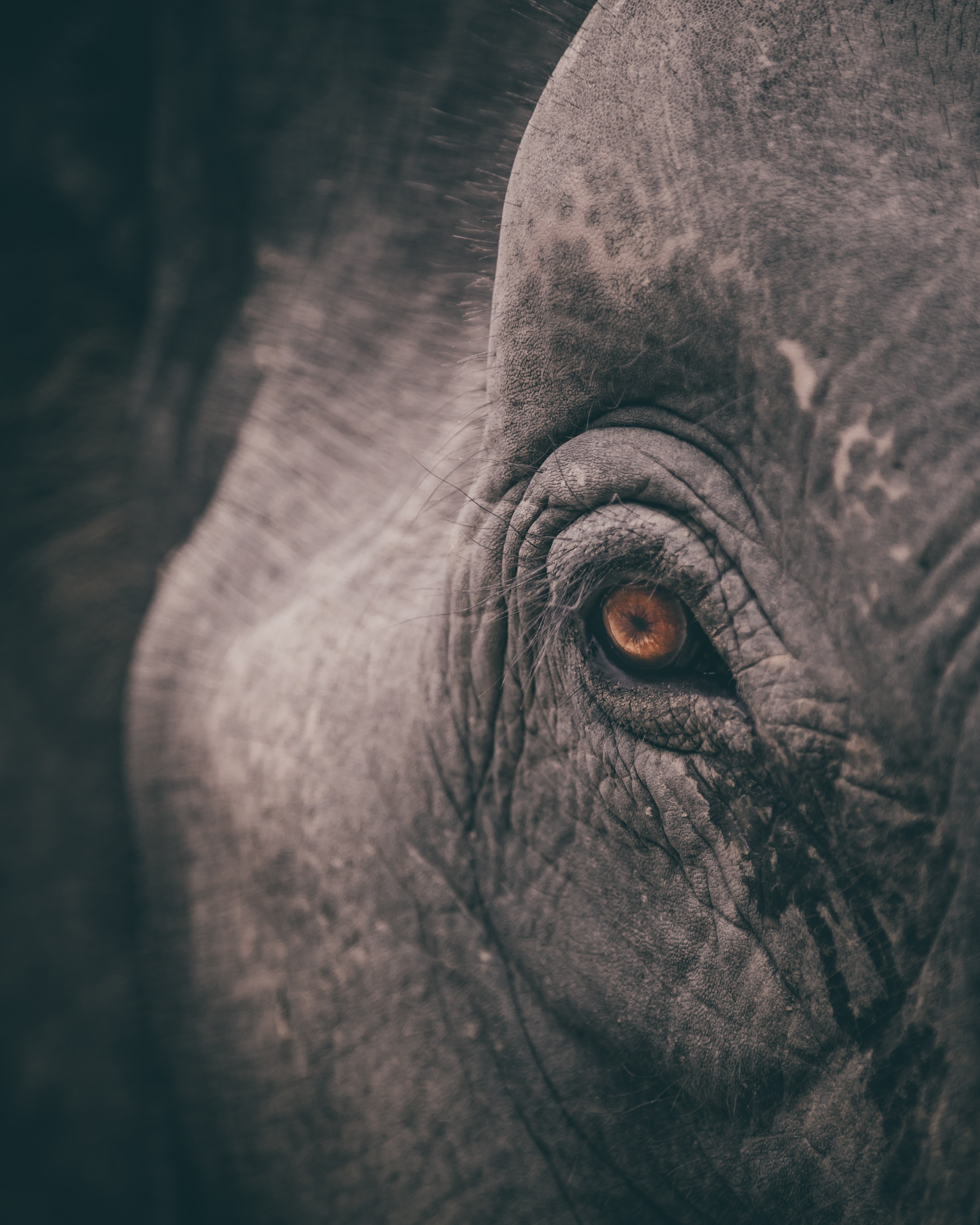 micro shot eye of elephant