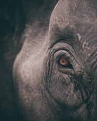 micro shot eye of elephant