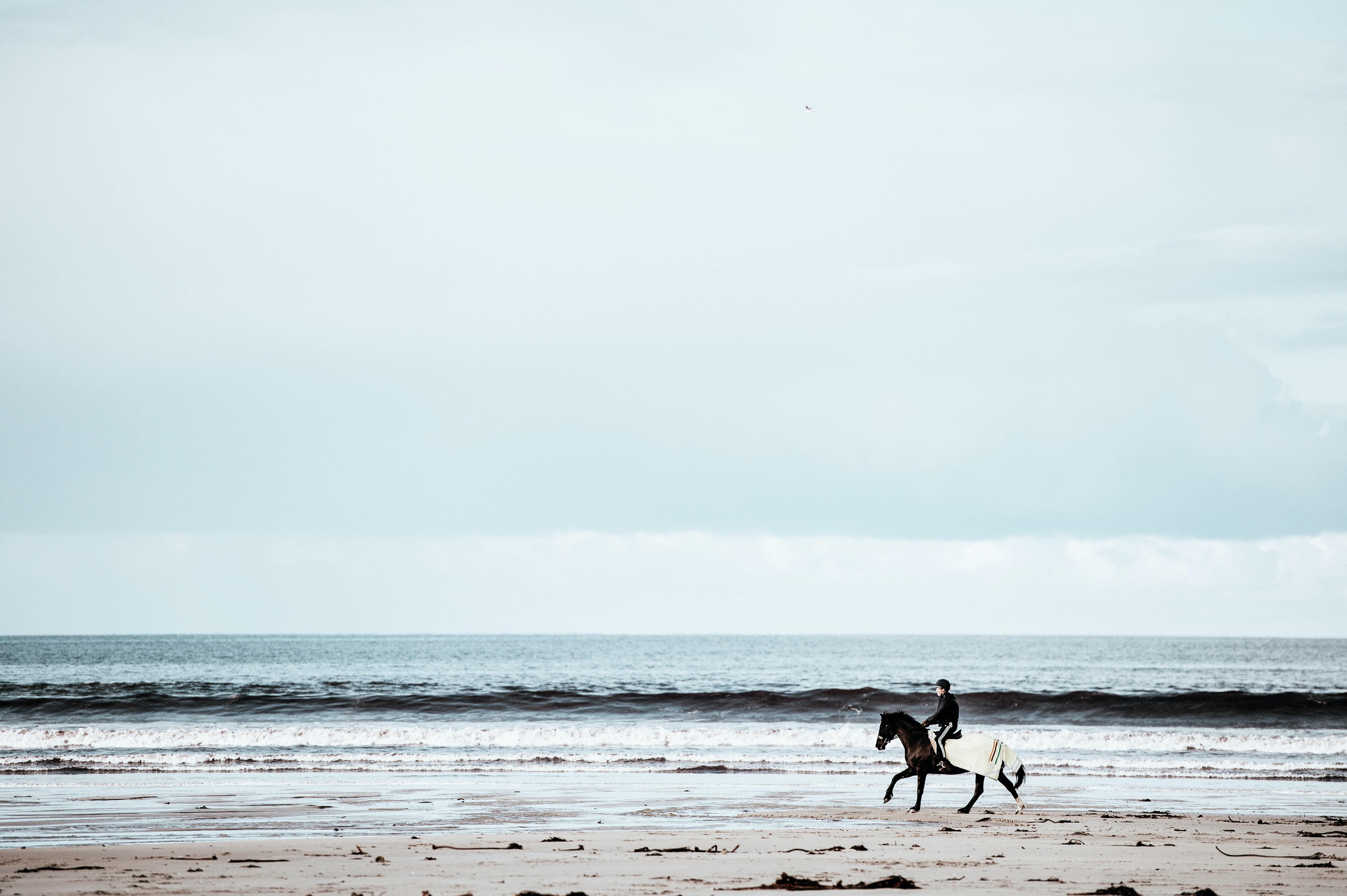 person riding on horse running in seashore
