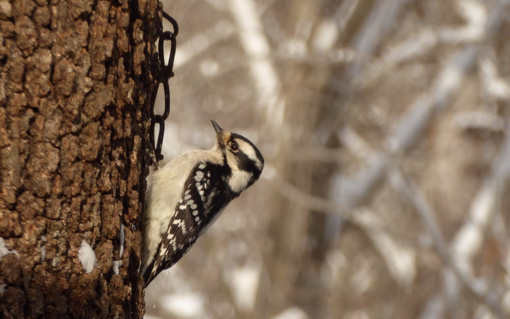 brown bird on tree trunk
