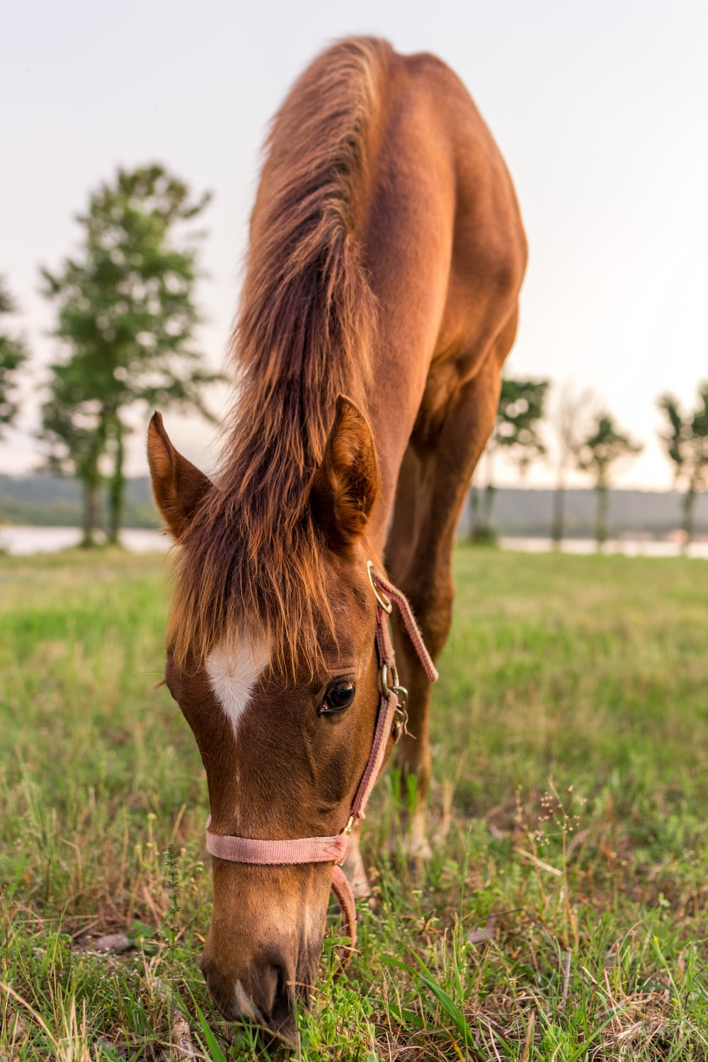 horse eating grass on field