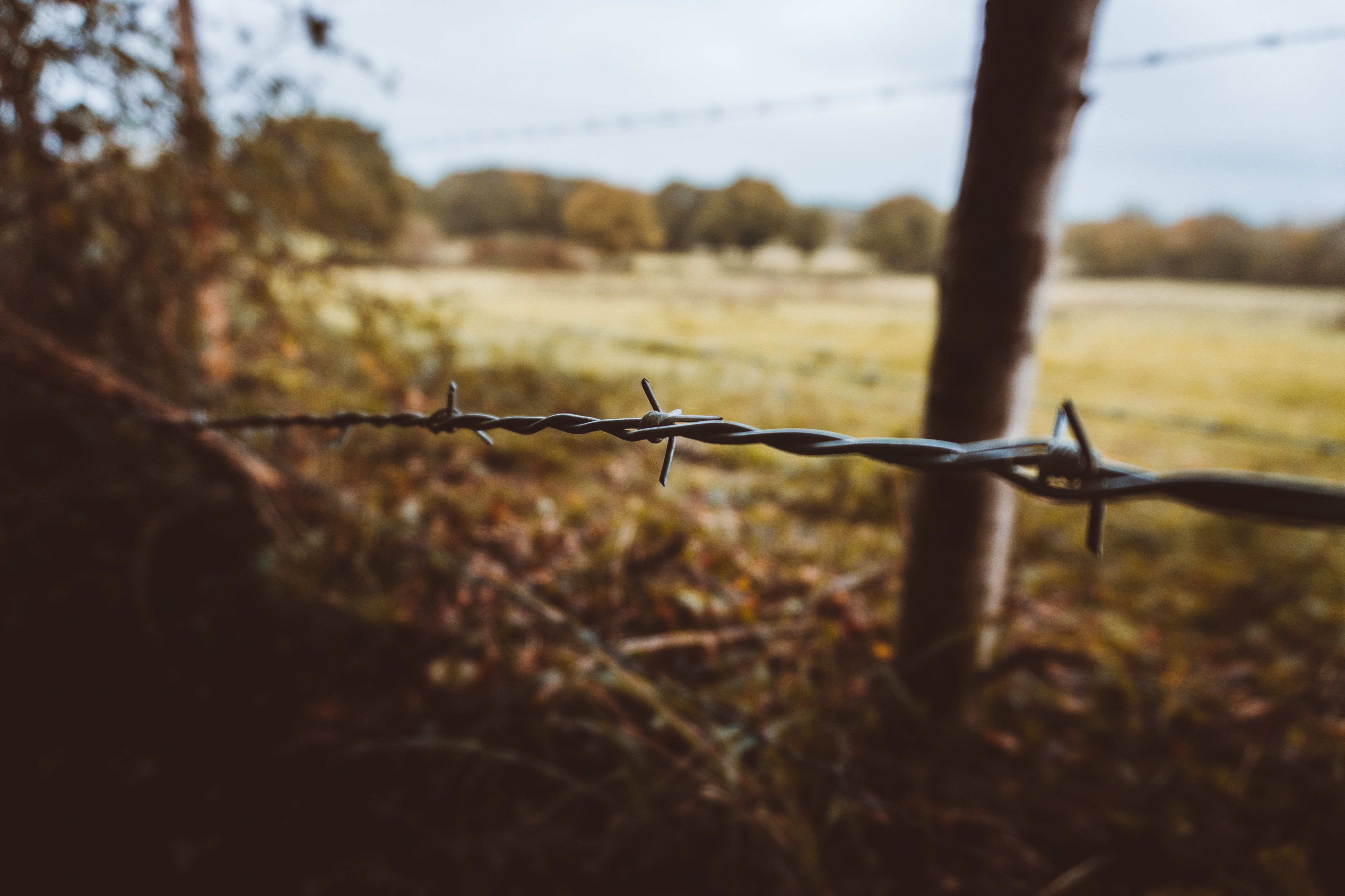 selective focus photography of barbwire fence