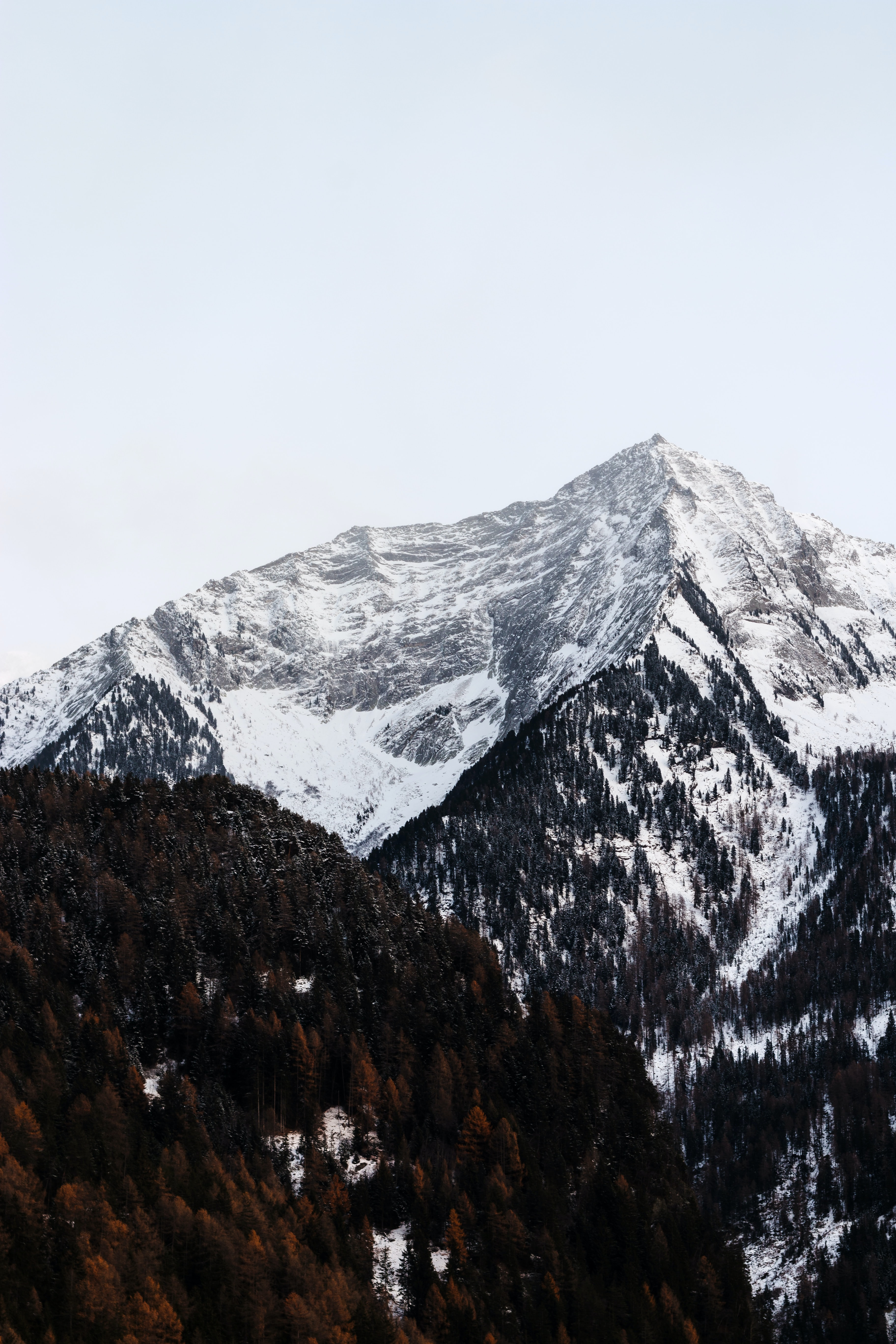 forest beside mountain covered with snow