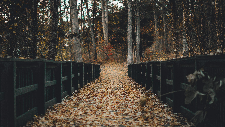 pathway between black wooden fence