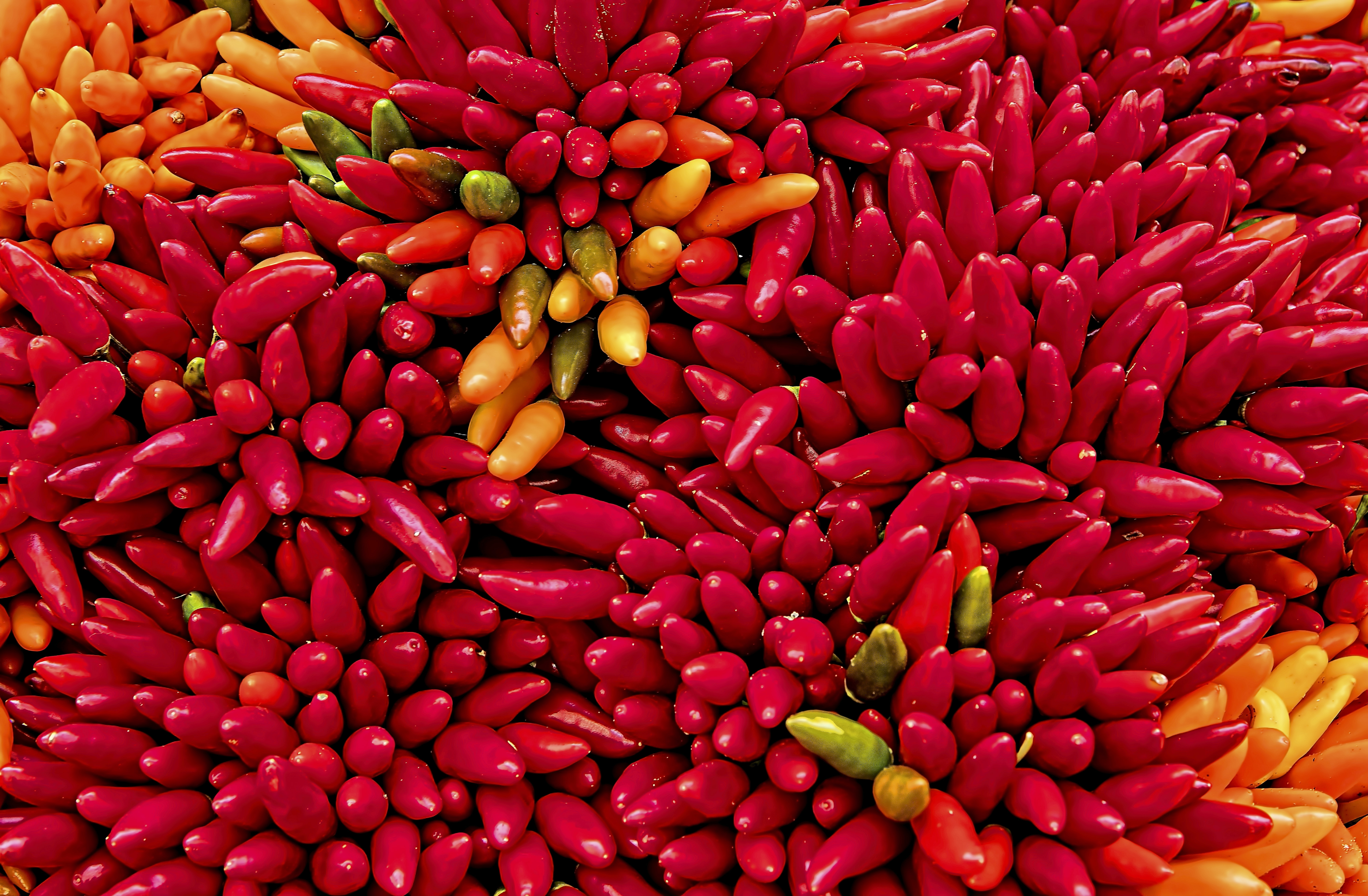 yellow and red chilis