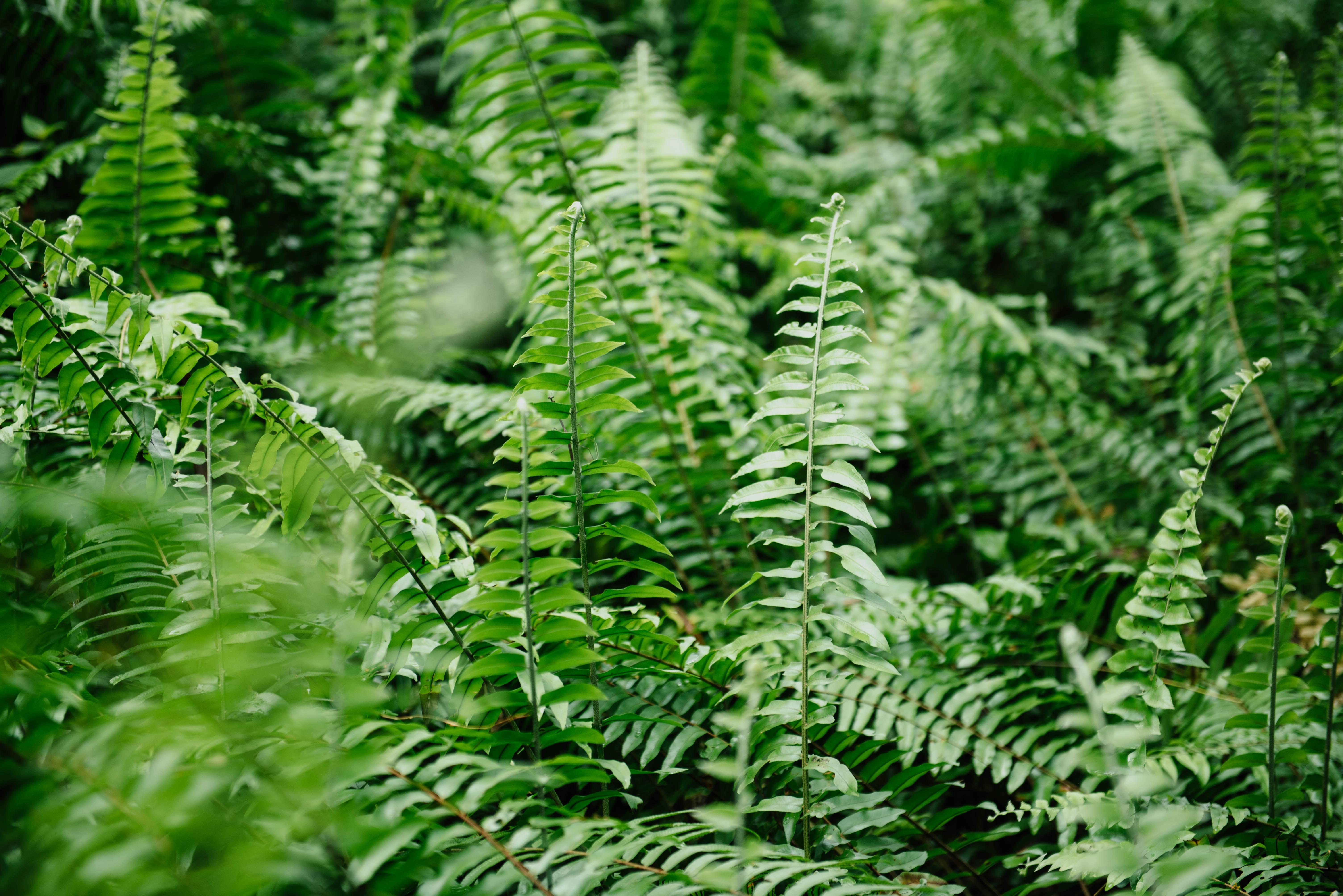 green ferns close up photography