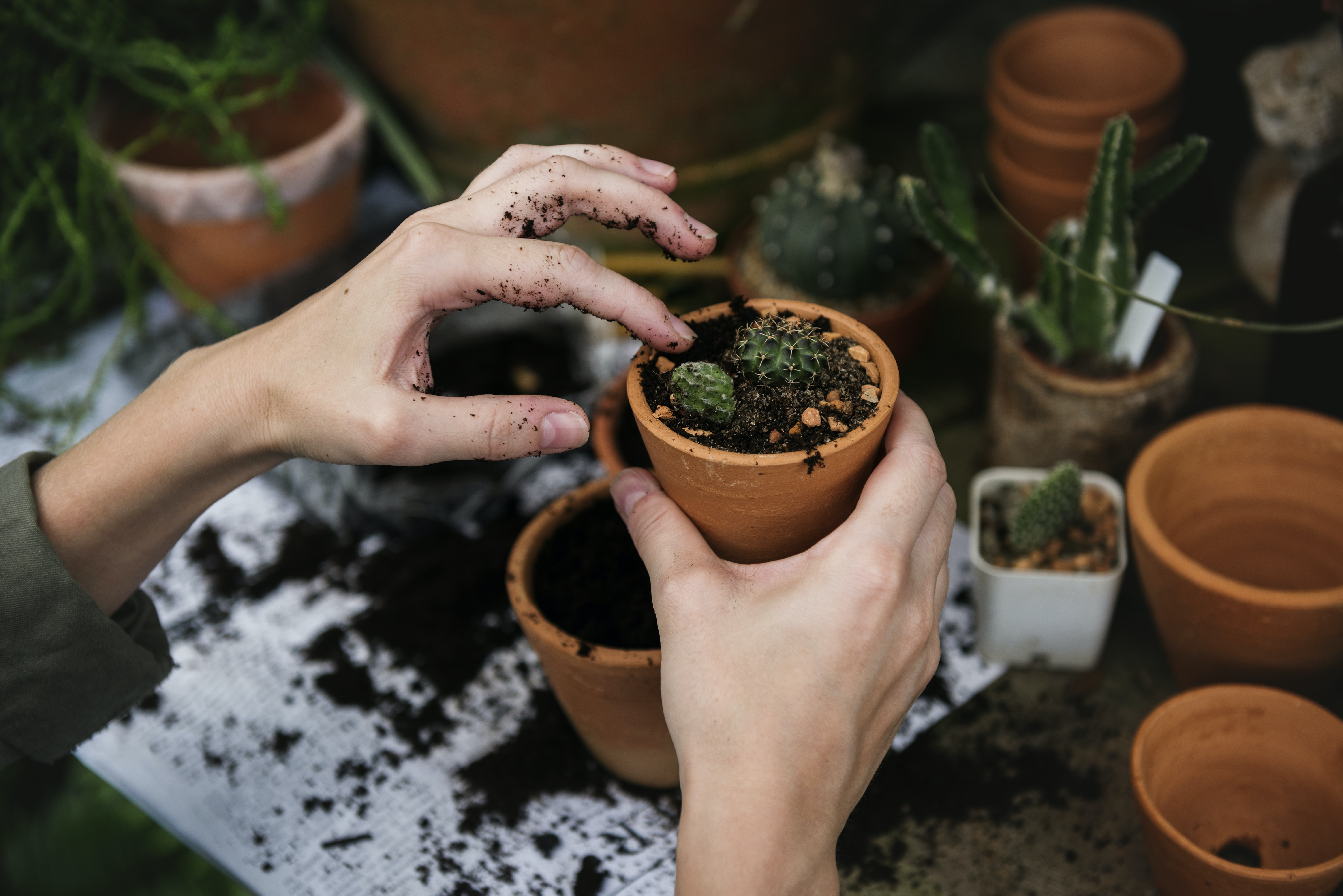 person holding orange clay garden pot with green leafed plant on it