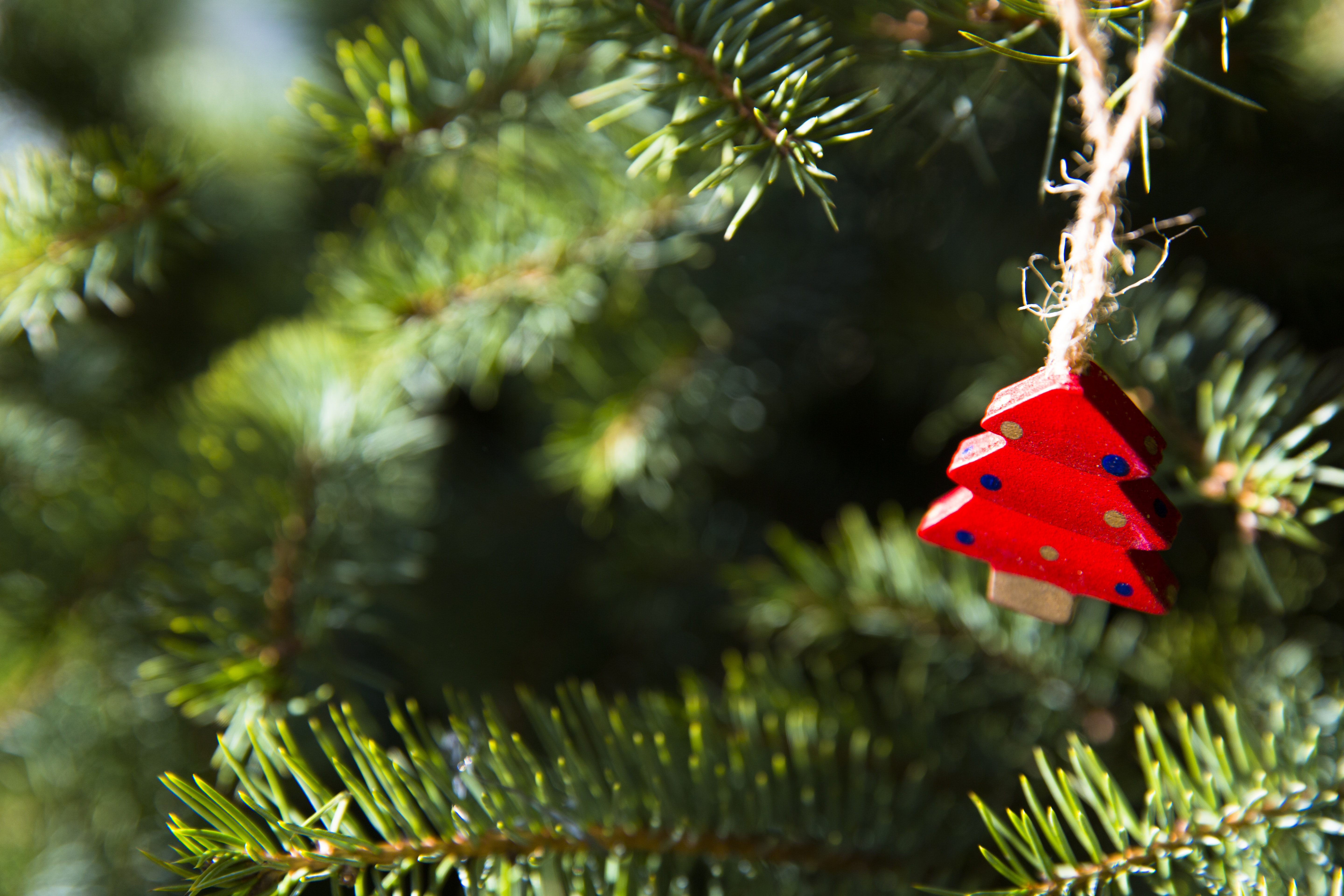 shallow focus photo of red holiday tree ornament