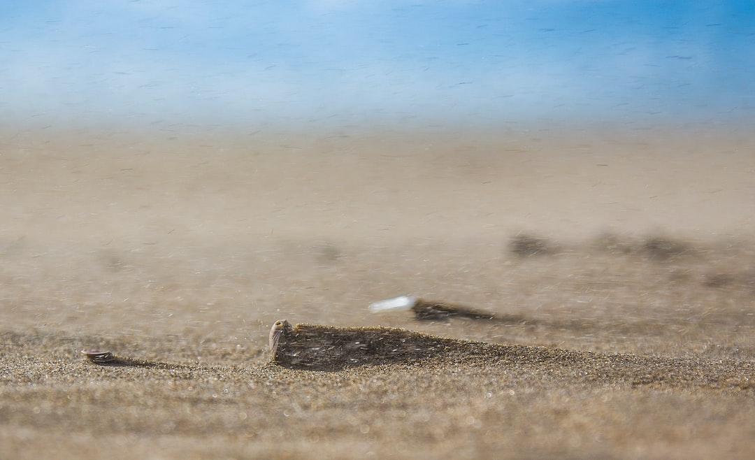 Sandblasted Seashell
