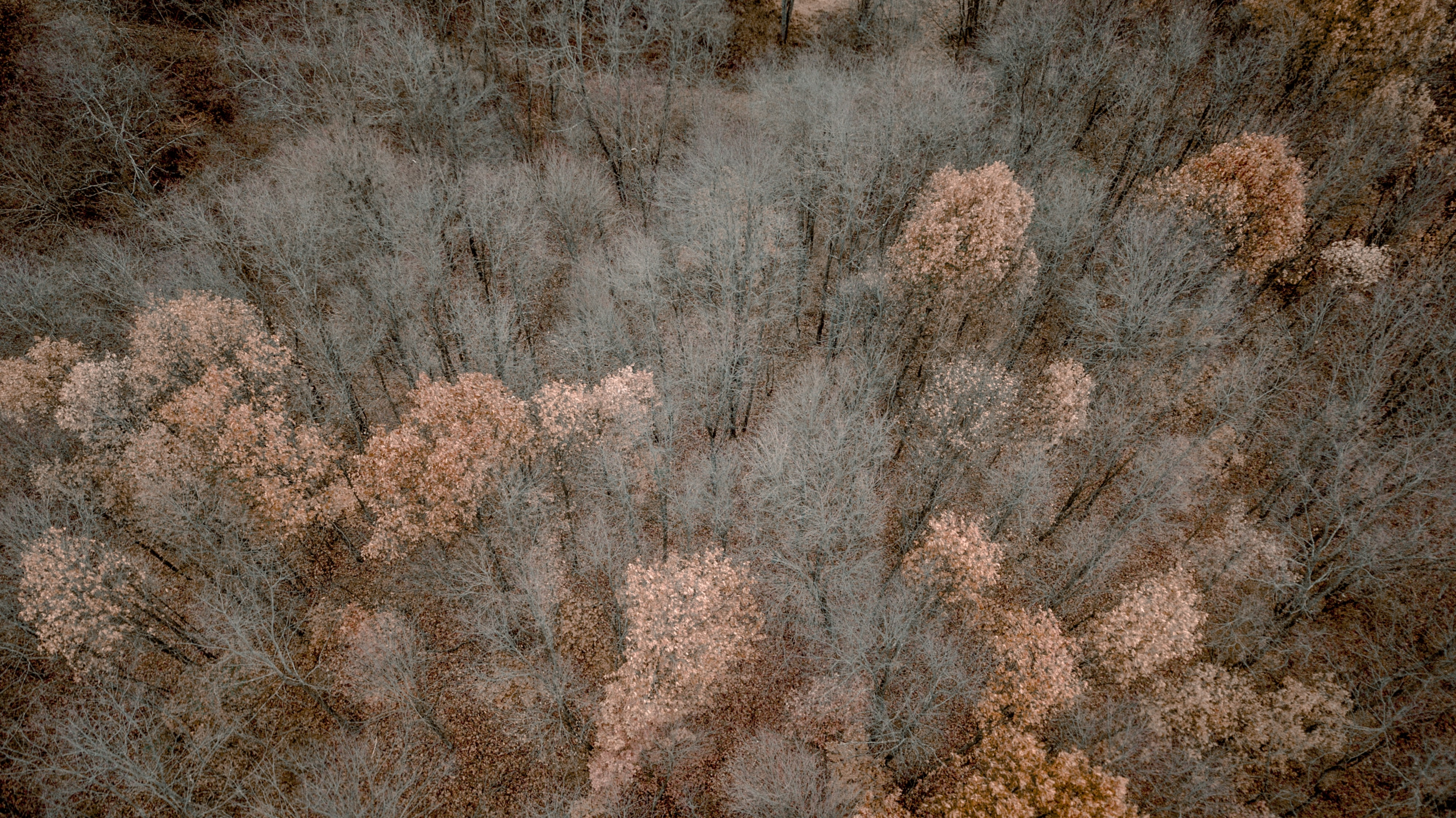 bird's eye view photo of brown tree