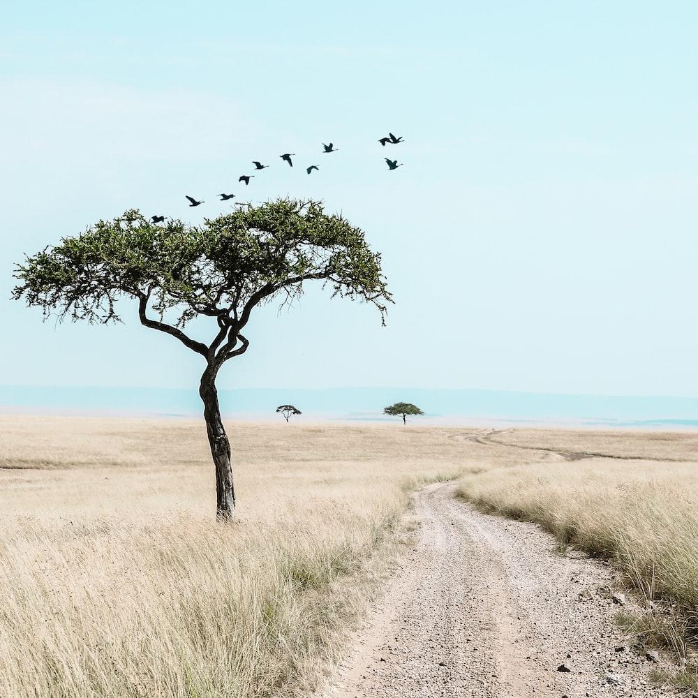 bird flying above grassland