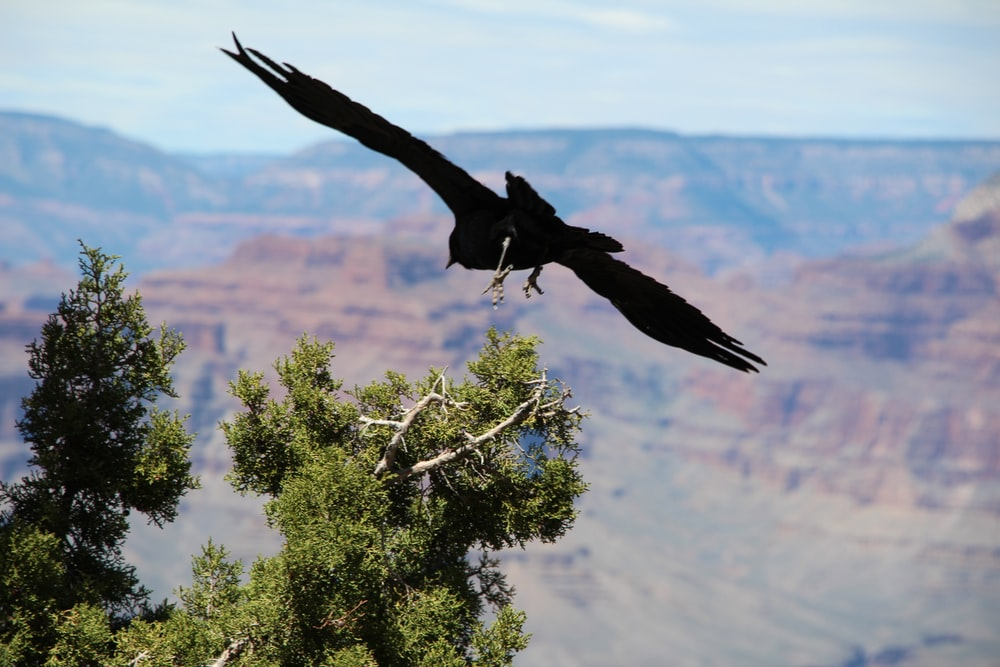 black bird on flying over the tree
