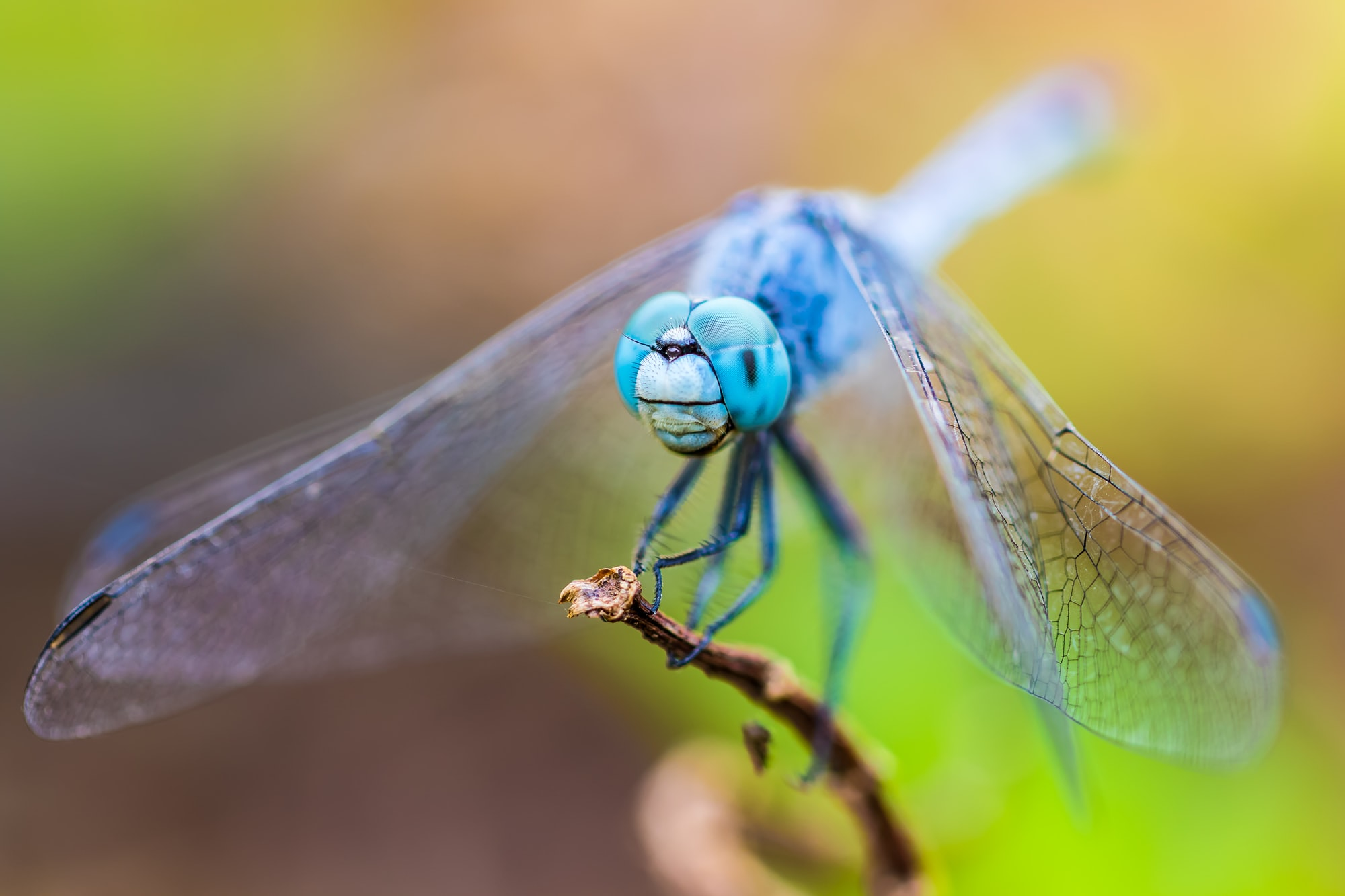 This was my first macro shot of the dragonfly With my new 7d mark ii using a 100mm f2.8 IS.