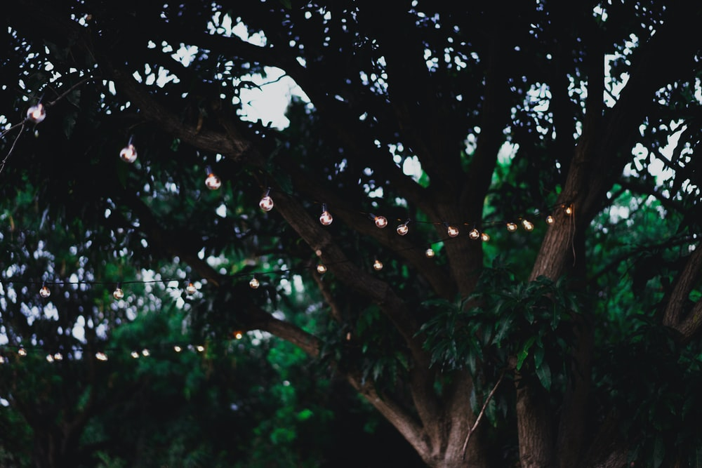 photo of string lights on tree