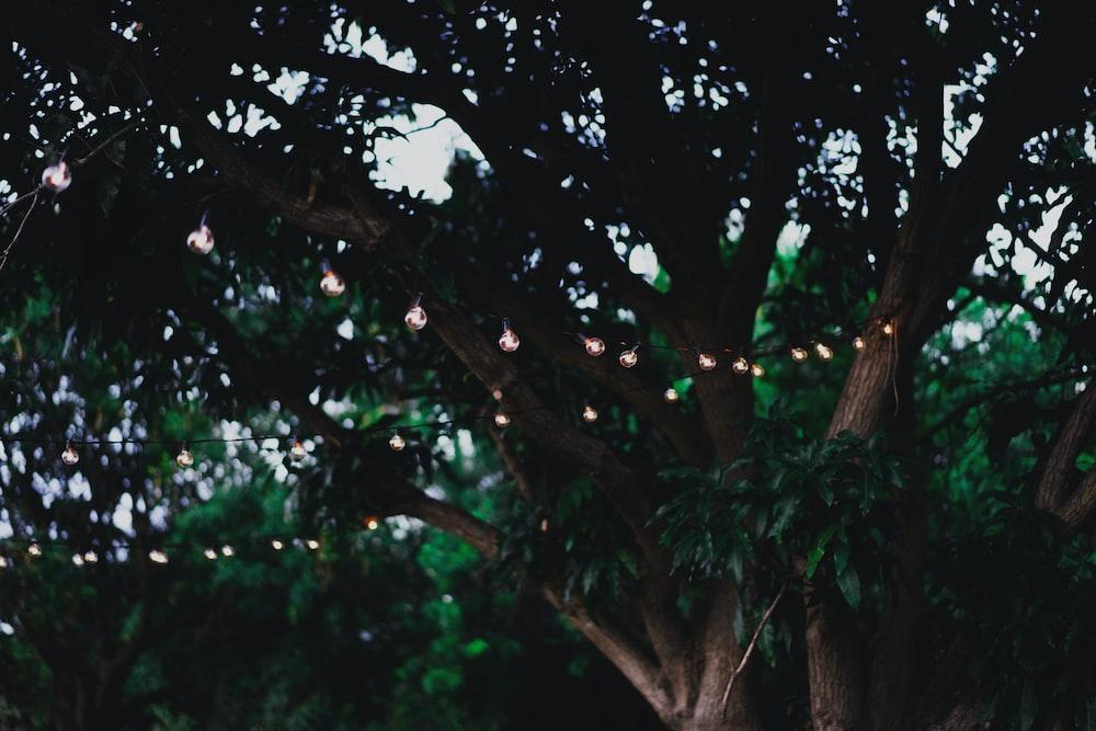 photo of string lights on tree
