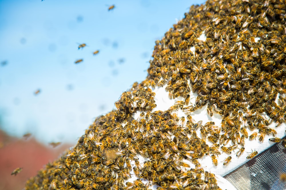 selective focus photography of group of bees