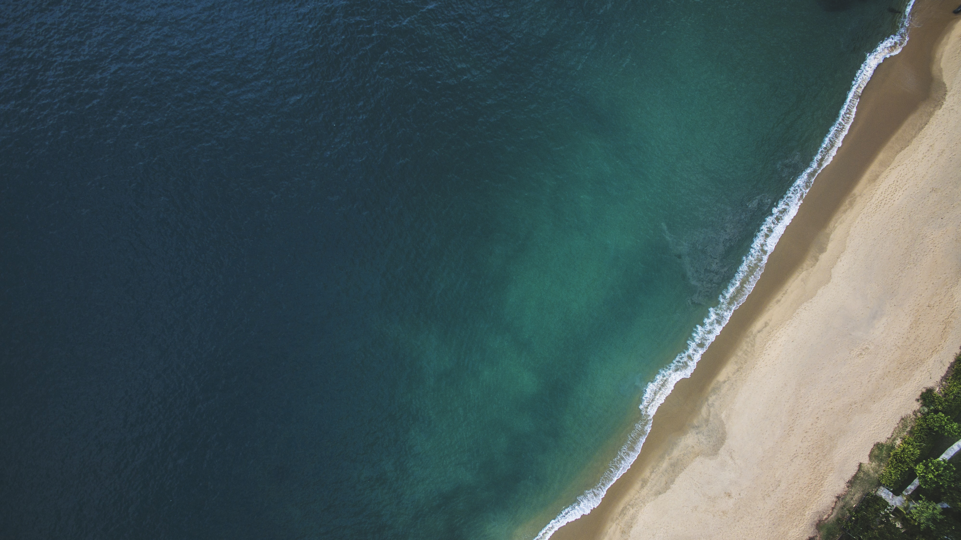 aerial view of beach and trees