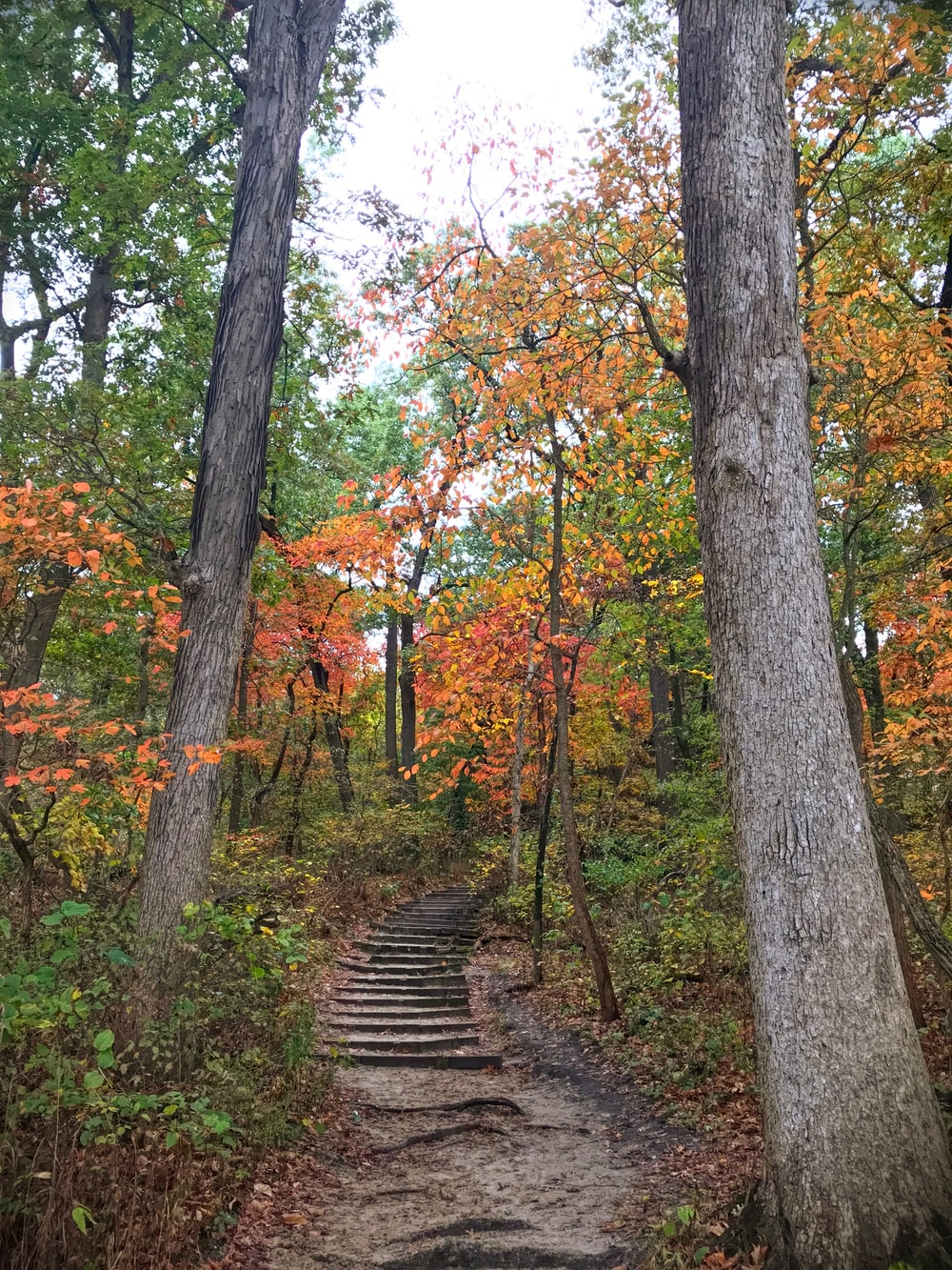 gray gray stair surrounded by trees