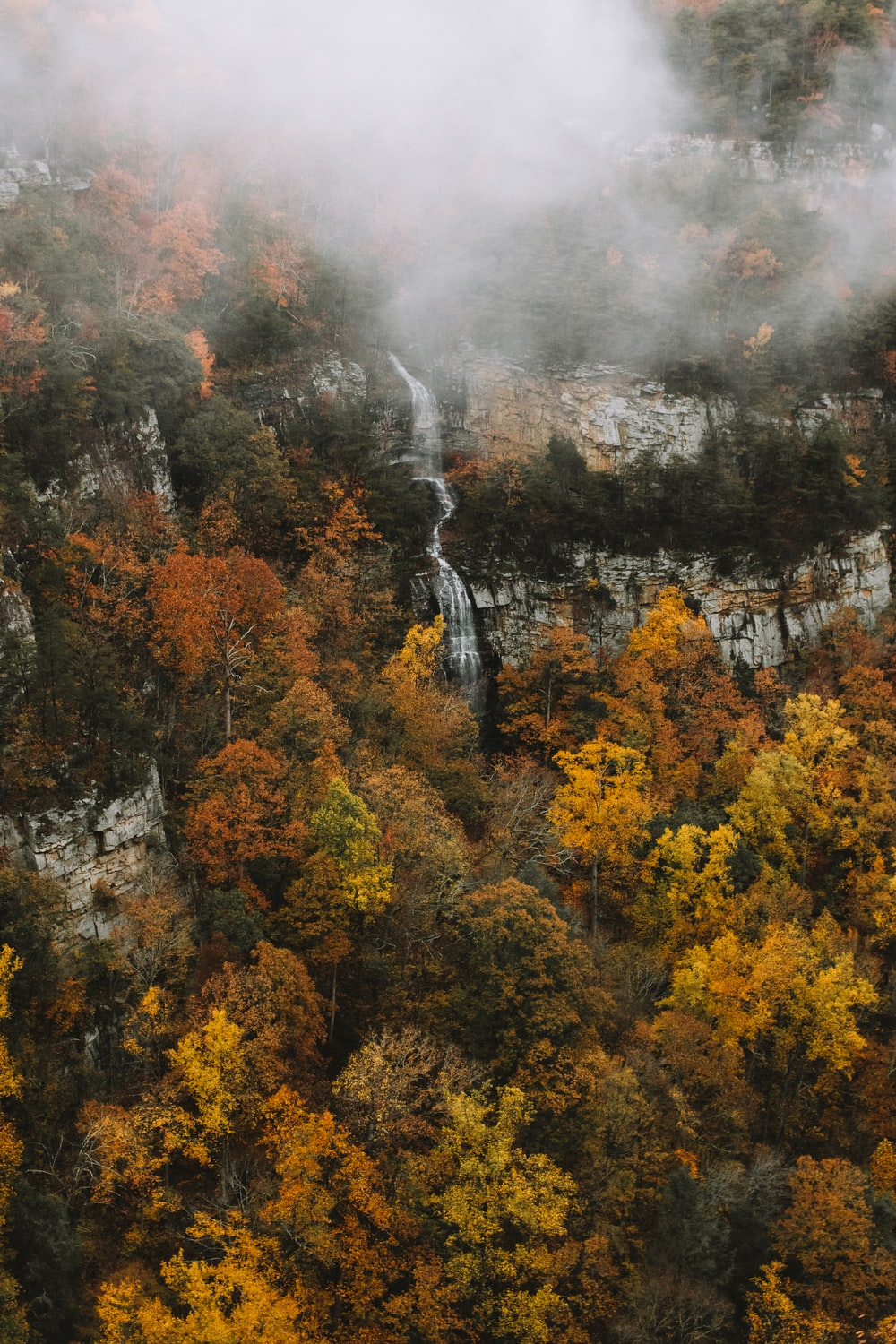 aerial view of waterfalls surrounded by tall trees with fog