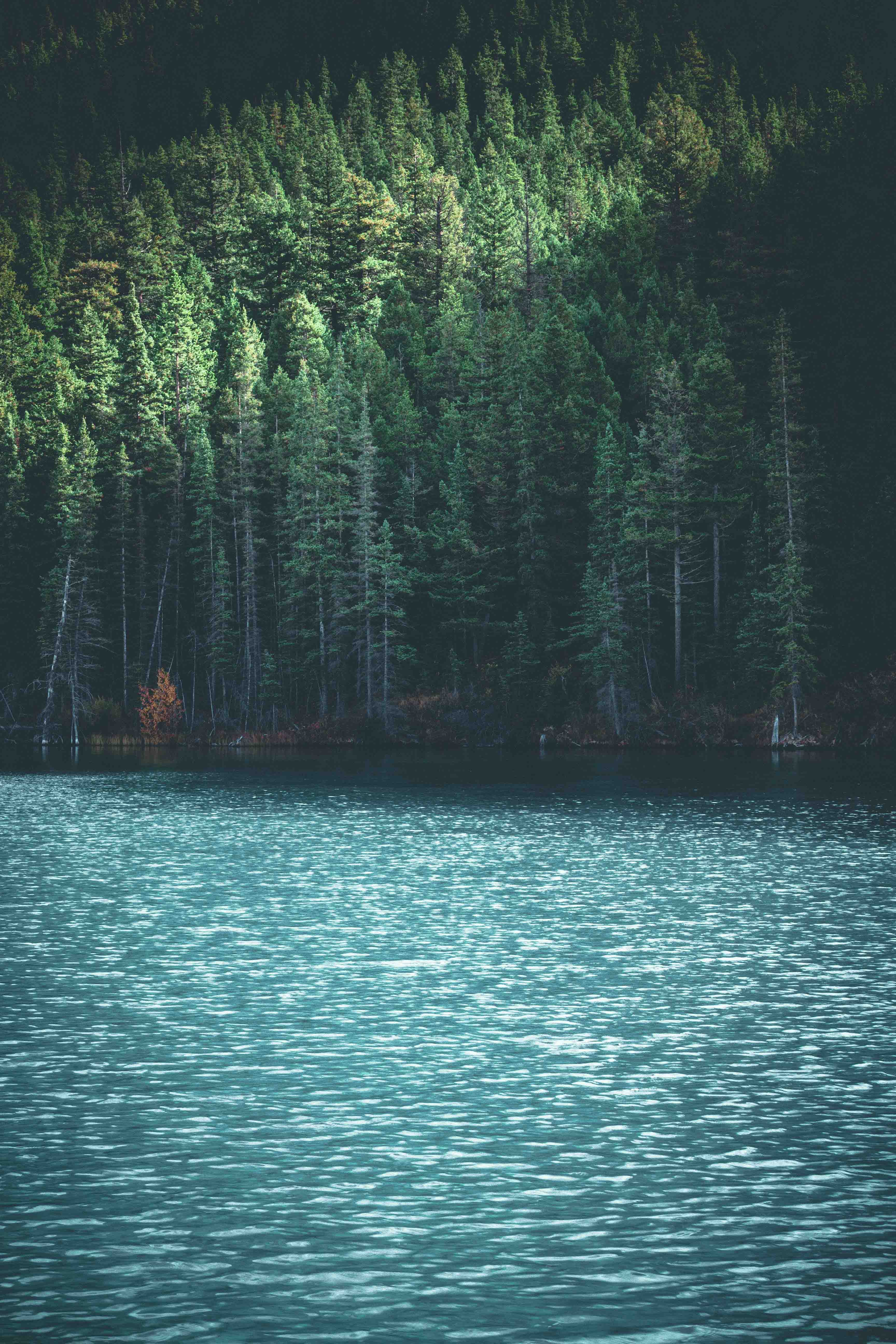 body of water beside trees