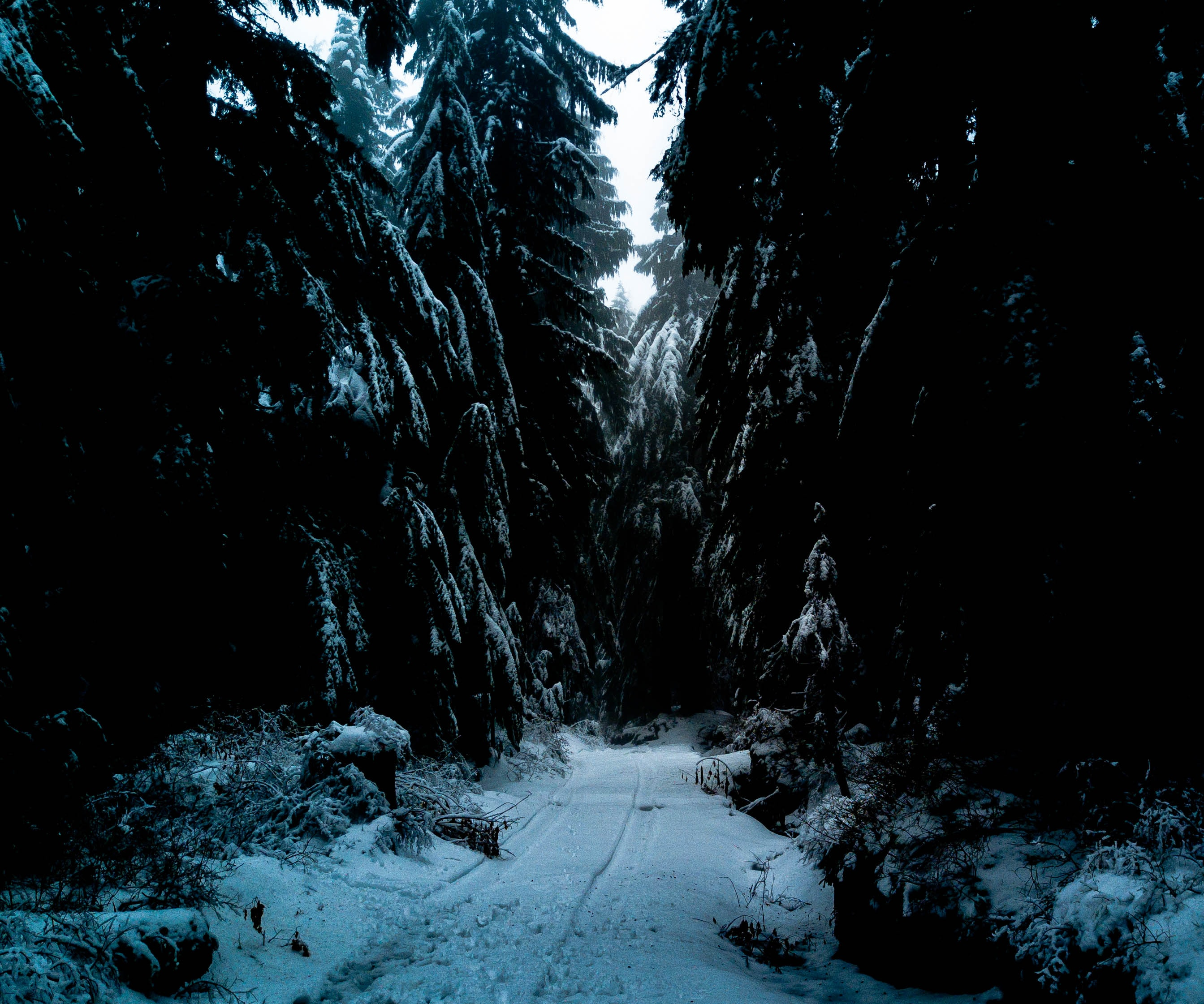 snow-covered road between inline evergreen trees