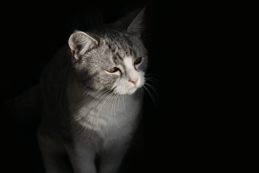 black and white cat in a dark area
