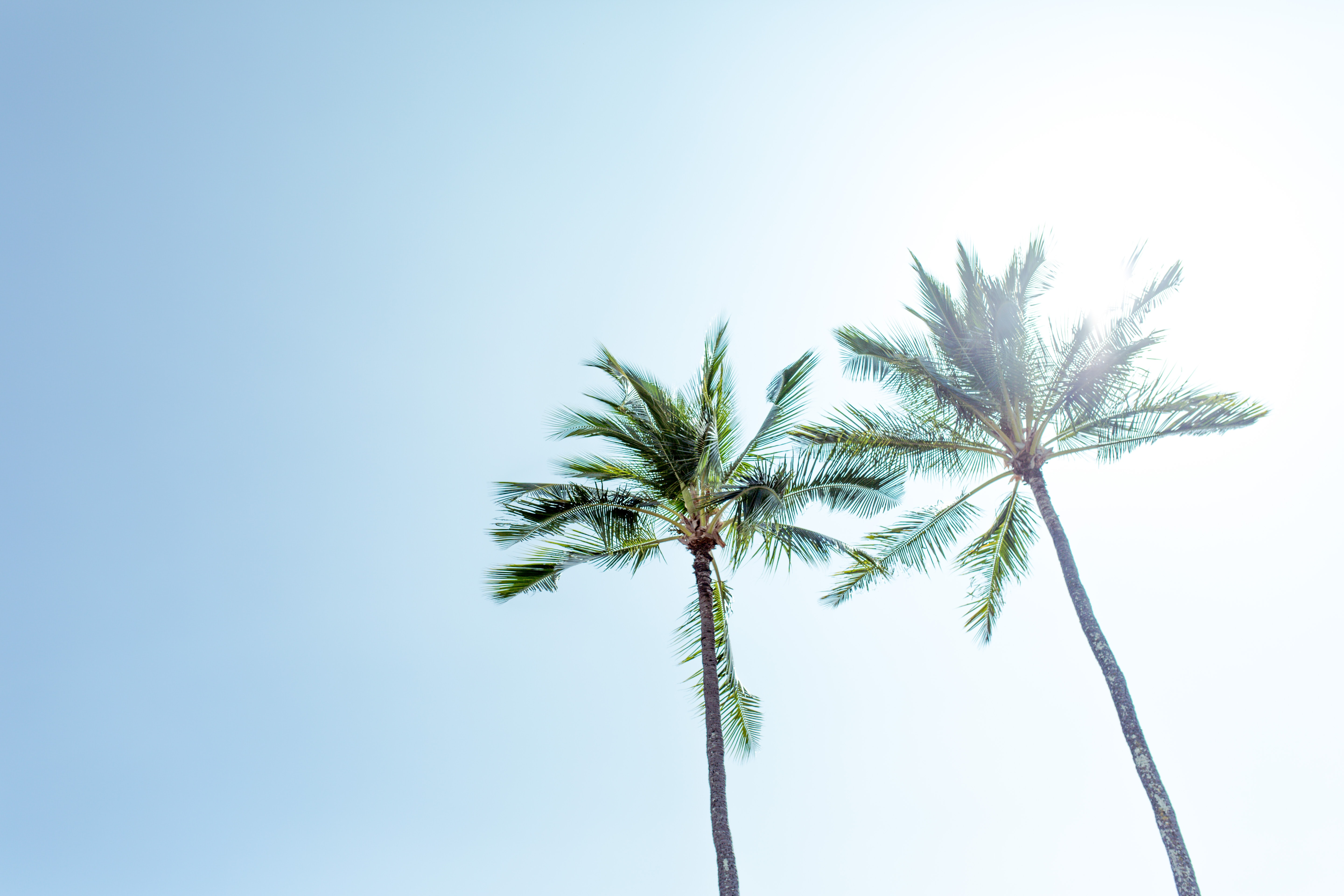 low angle photography two palm trees