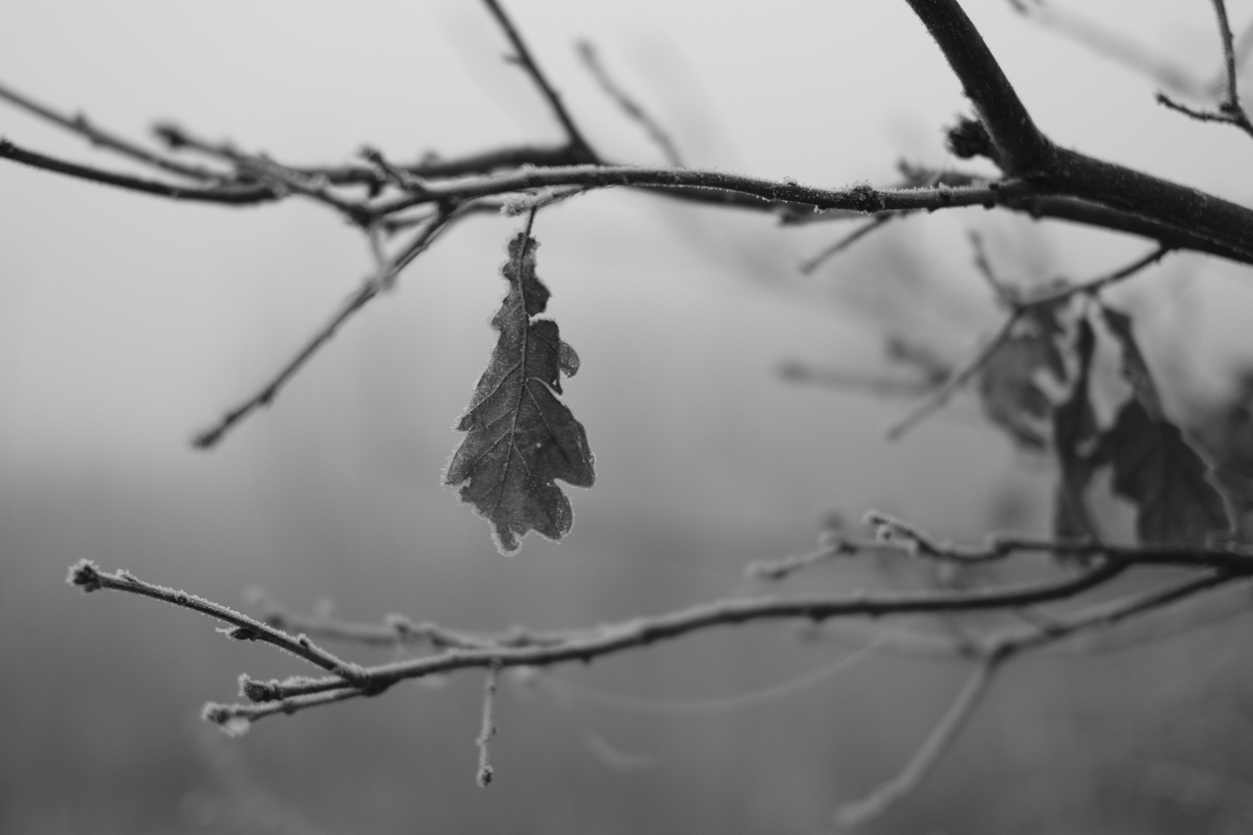 selective focus grayscale photography of leaf