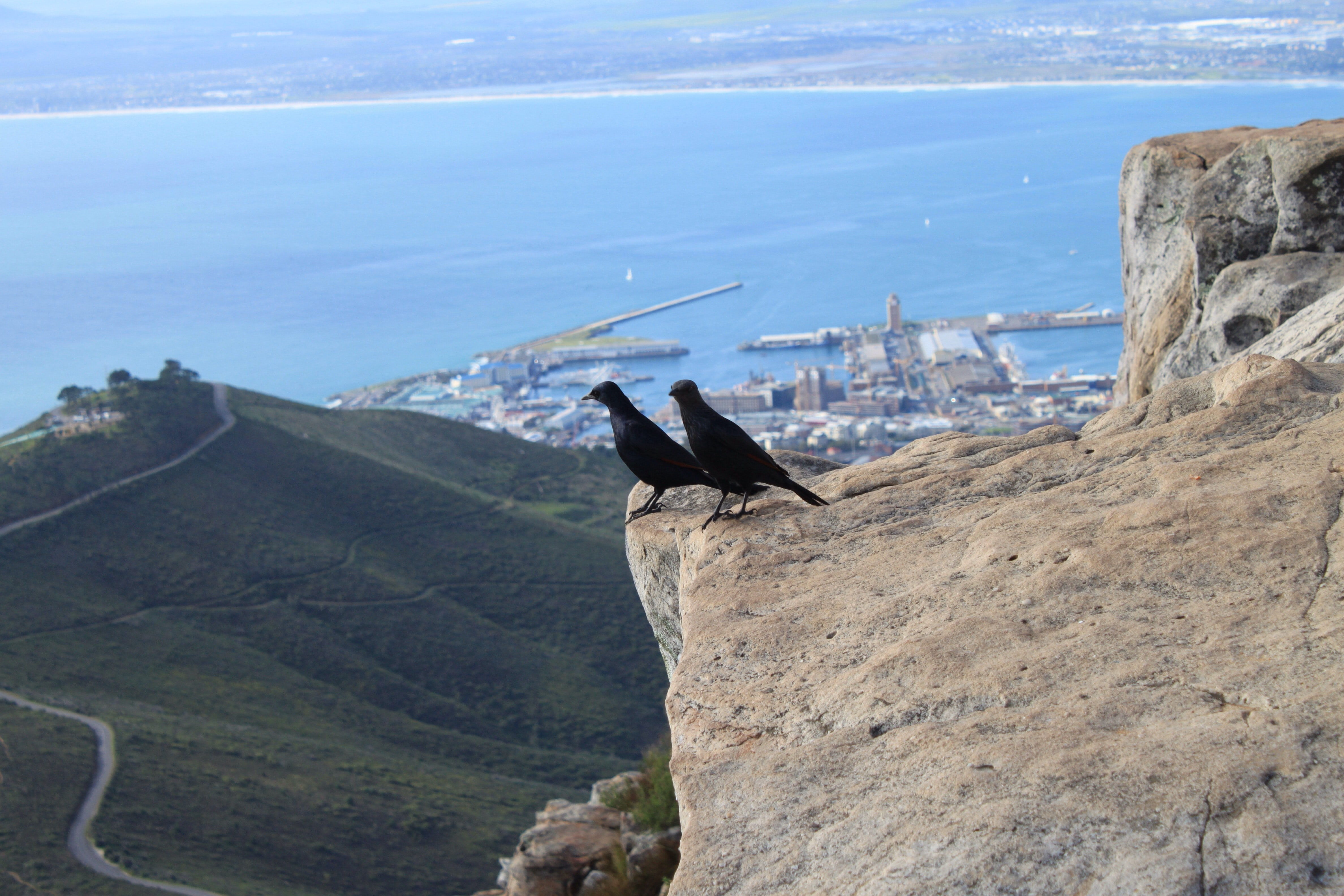 two crows near edge of cliff during daytime