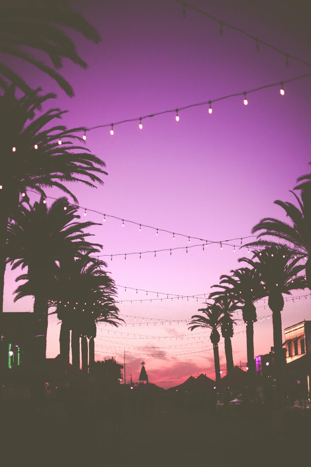 Palm Trees With String Lights