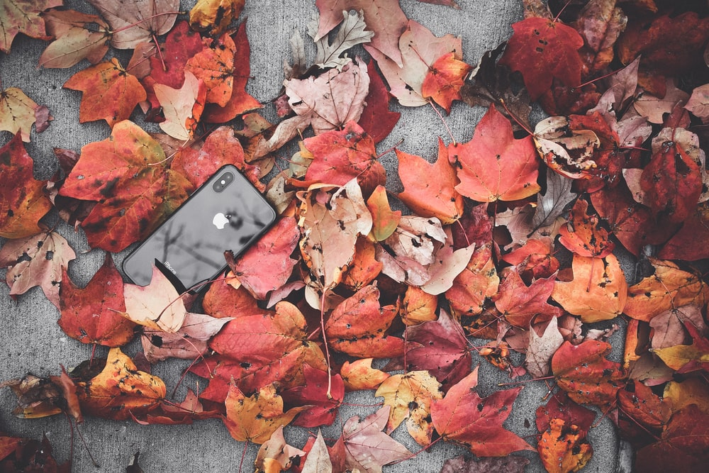 black iPhone X beside withered leaves