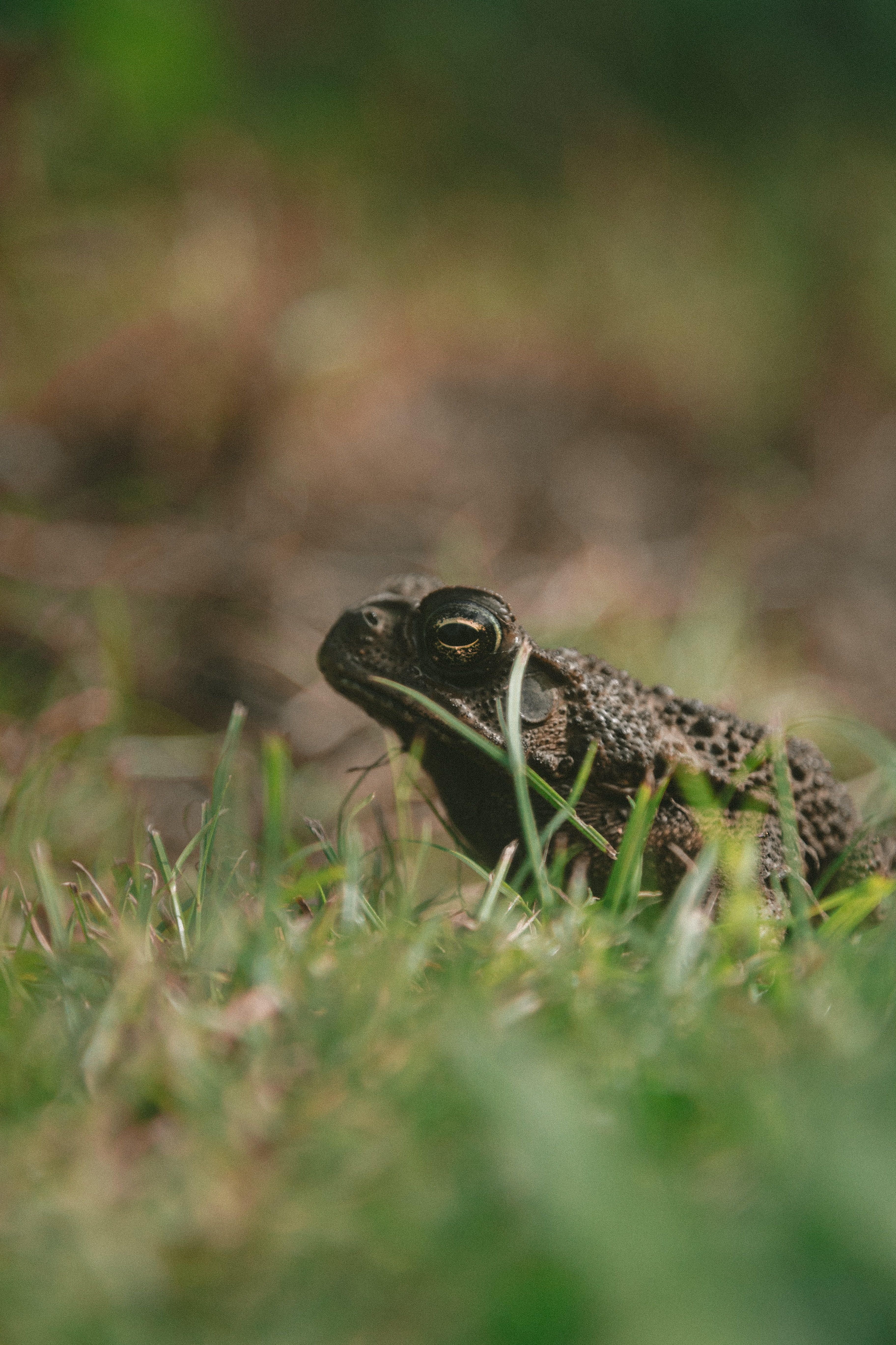 gray frog on grass
